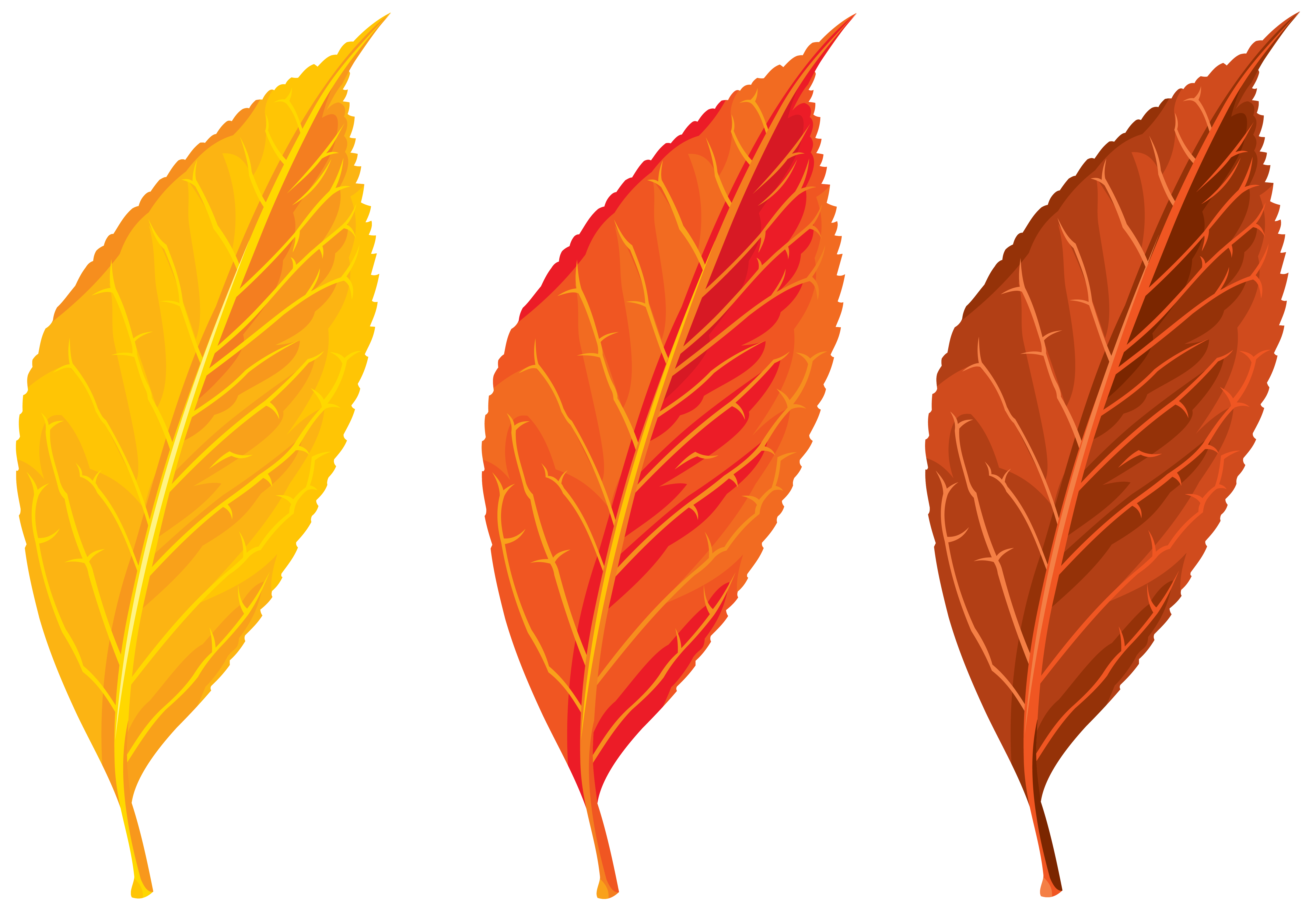 Autumn Leaves Set Clipart PNG Image | Gallery Yopriceville - High ...