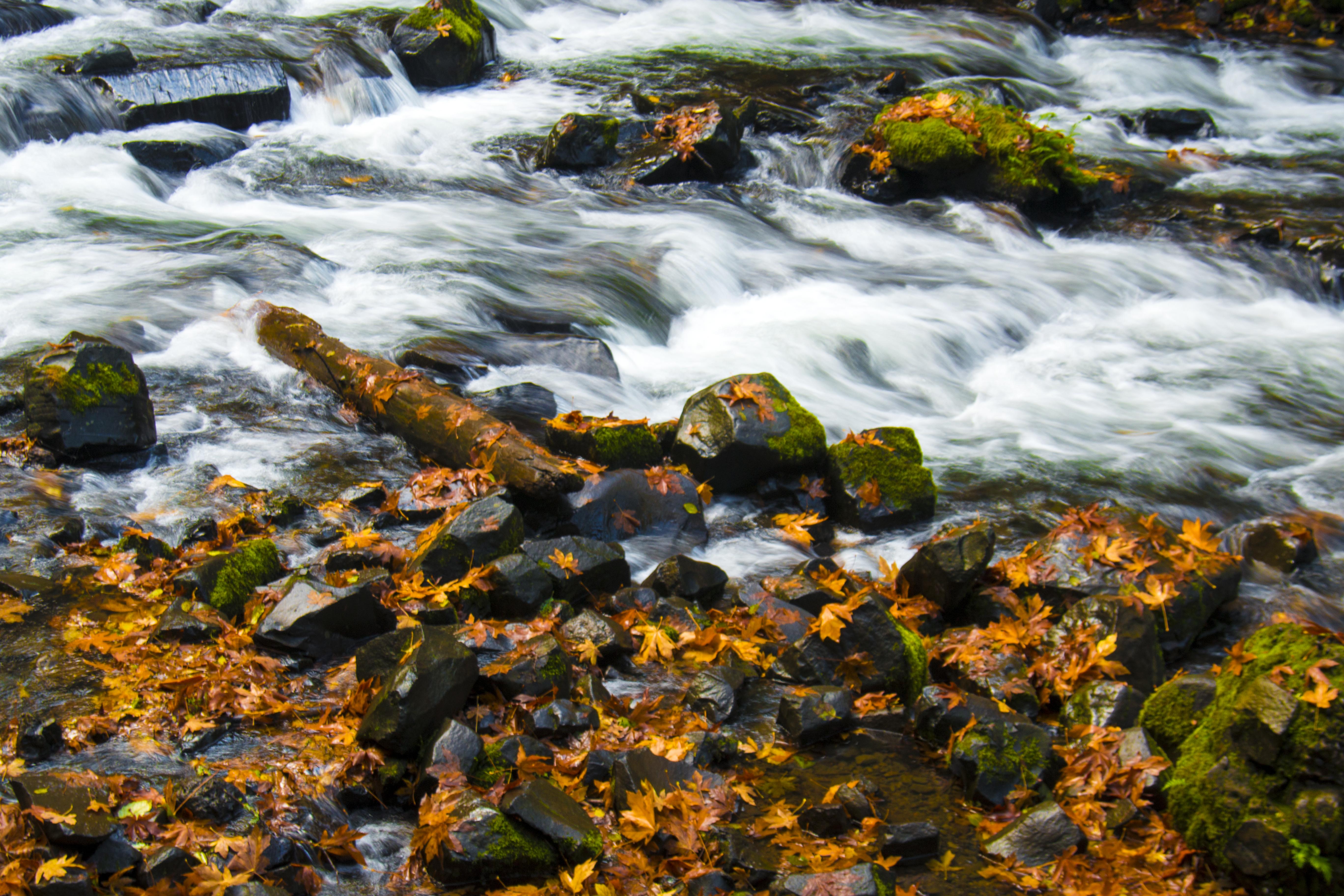 Autumn Leaves in Oregon, Autumn leaves, Oregon, River, Stream, HQ Photo