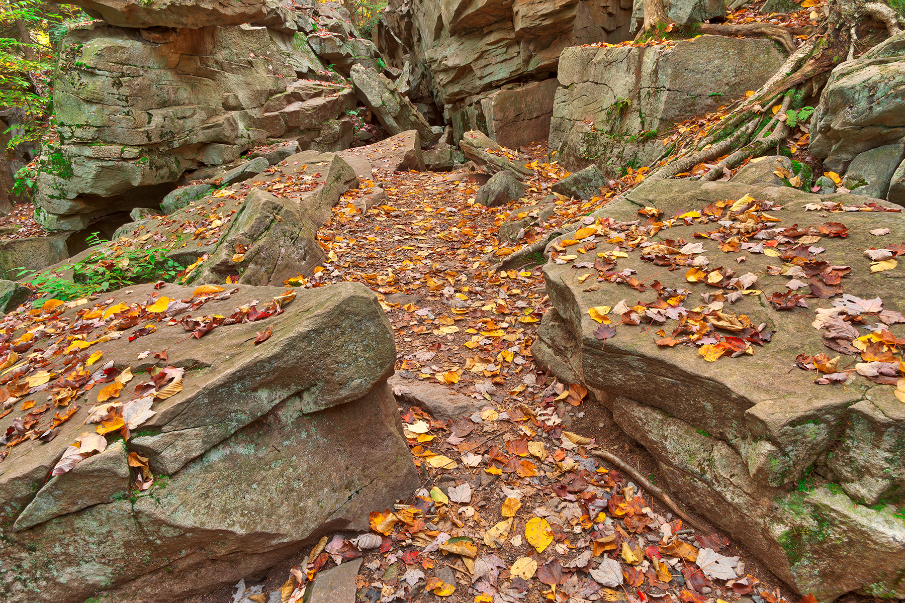 Autumn Midway Crevasse - Ricketts Glen HDR, Plants, Rugged, Rough, Roots, HQ Photo