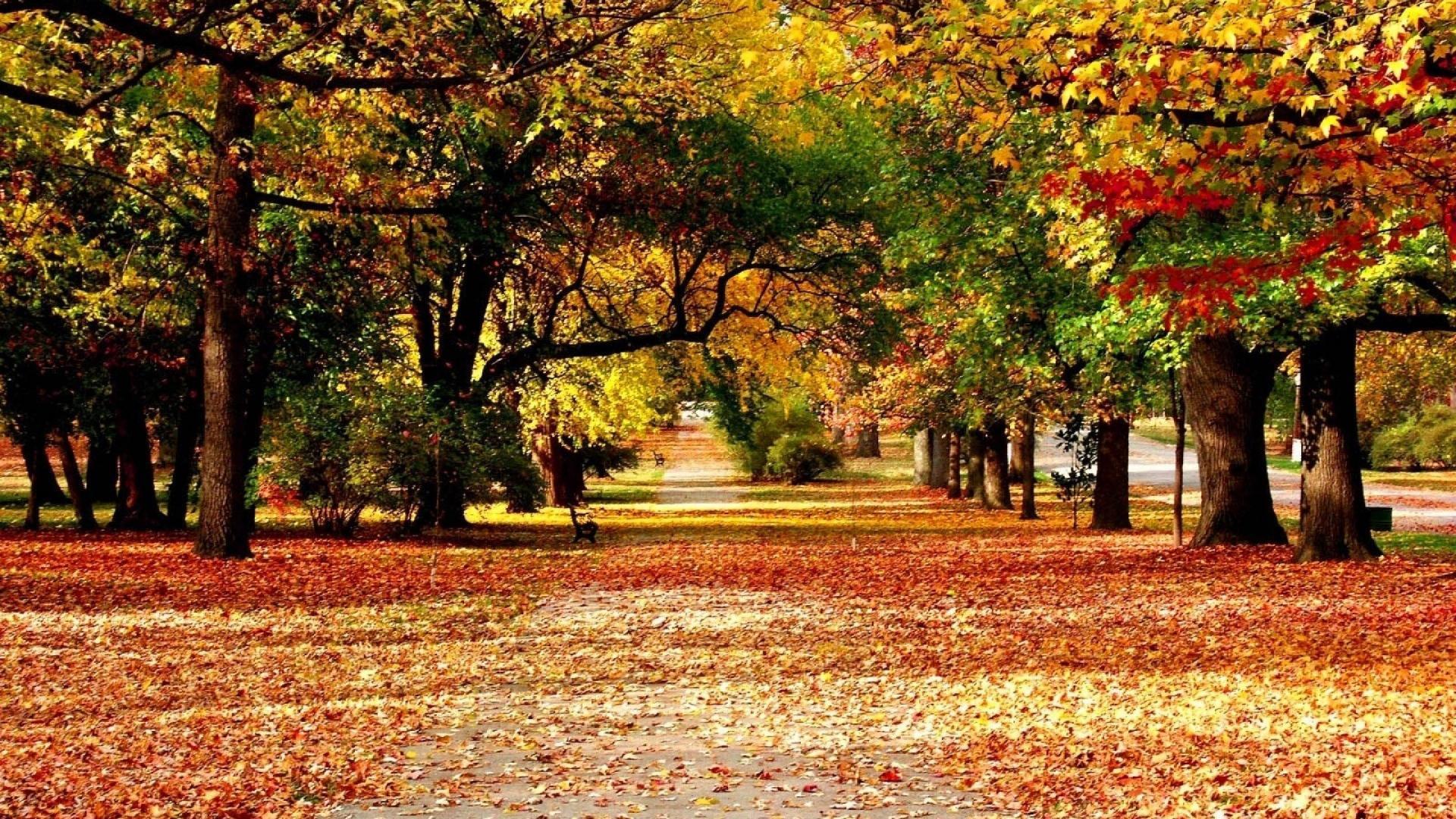 Autumn park wallpaper | (86207)