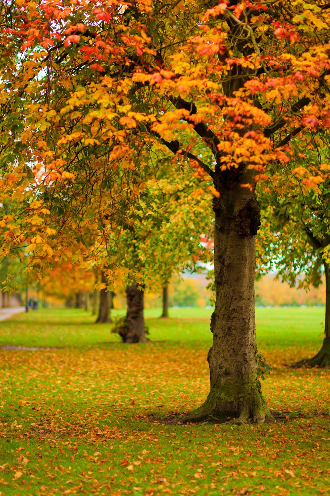 Autumn Park Free Stock Photo - Public Domain Pictures