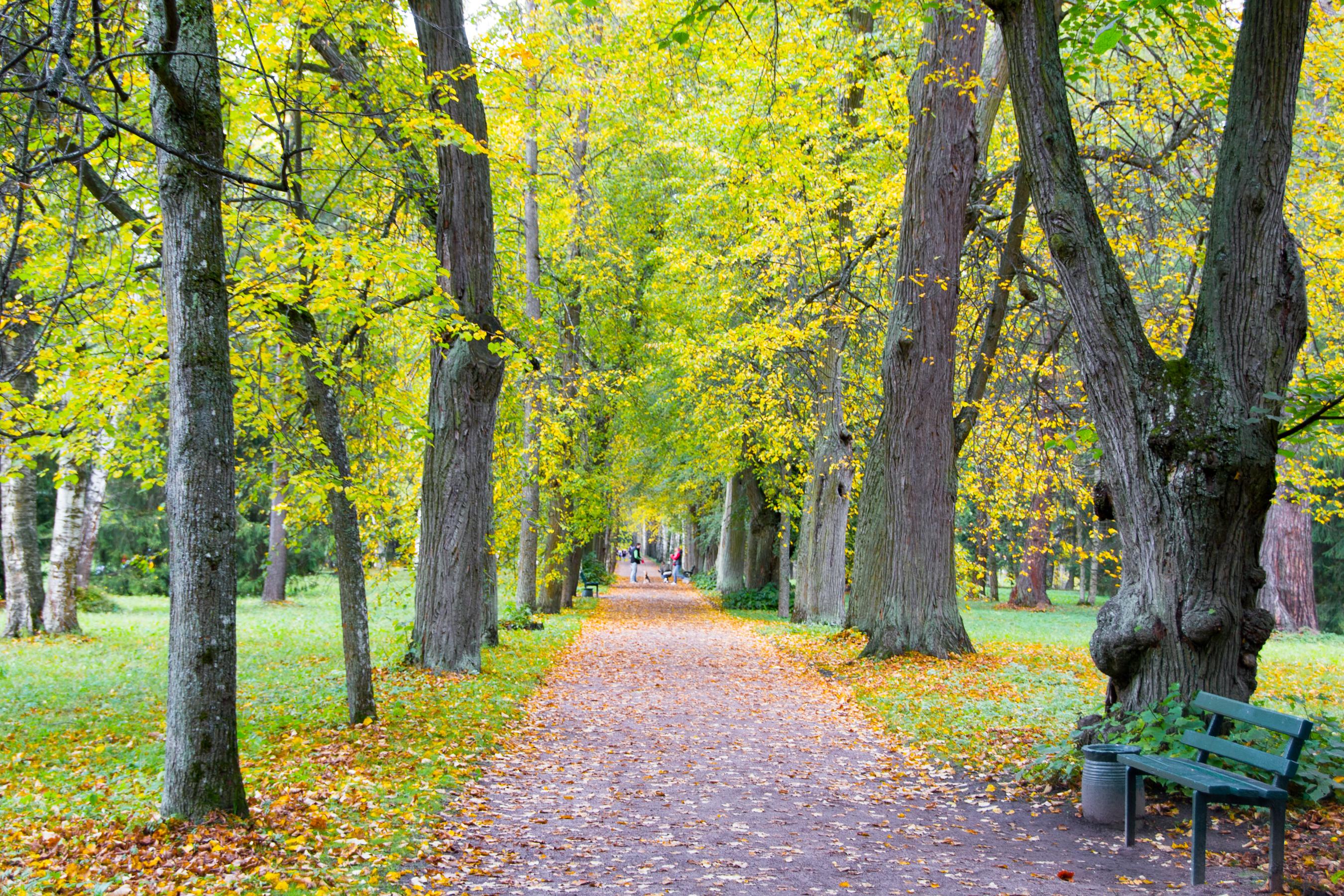 autumn park, Autumn, Orange, Woods, Vibrant, HQ Photo