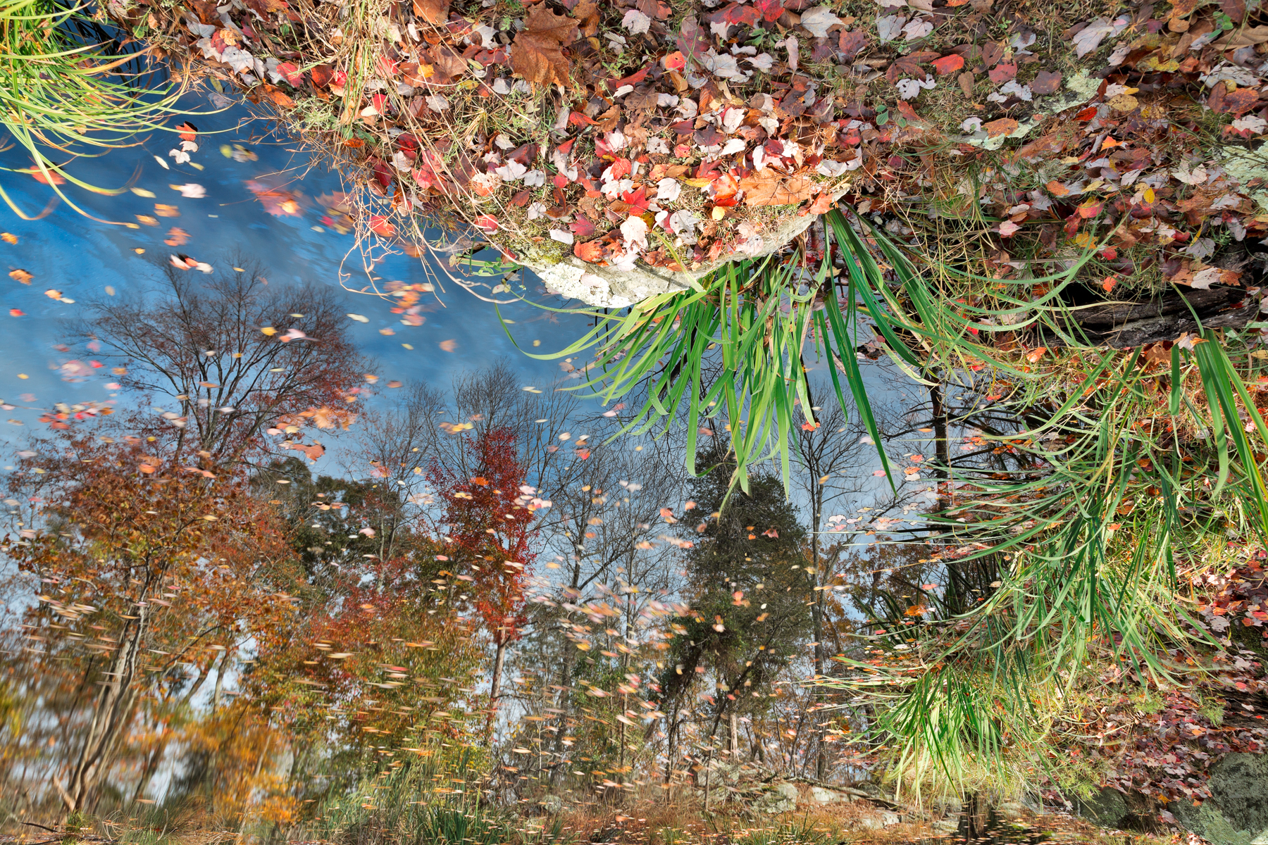 Autumn Pond Reflections, Abstract, Quiet, Serenity, Serene, HQ Photo