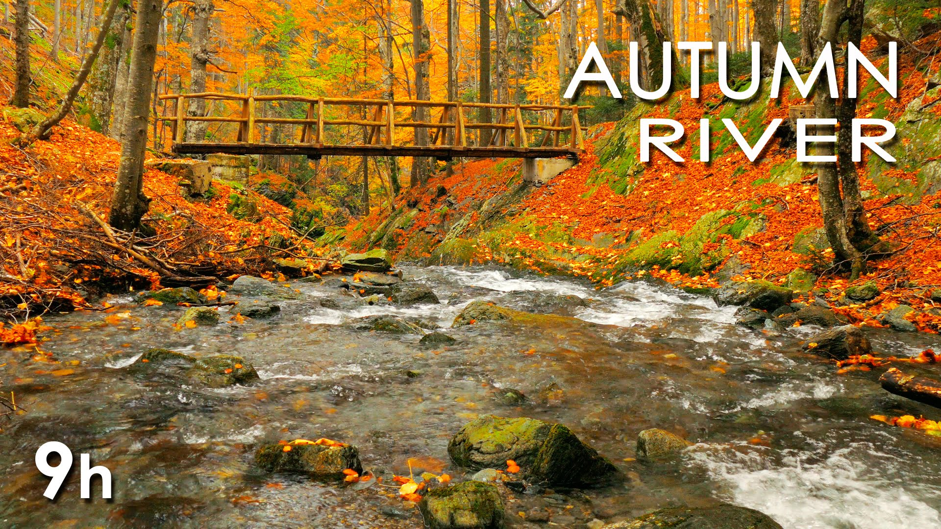 Autumn River Sounds - Relaxing Nature Video - Sleep/ Relax/ Study ...
