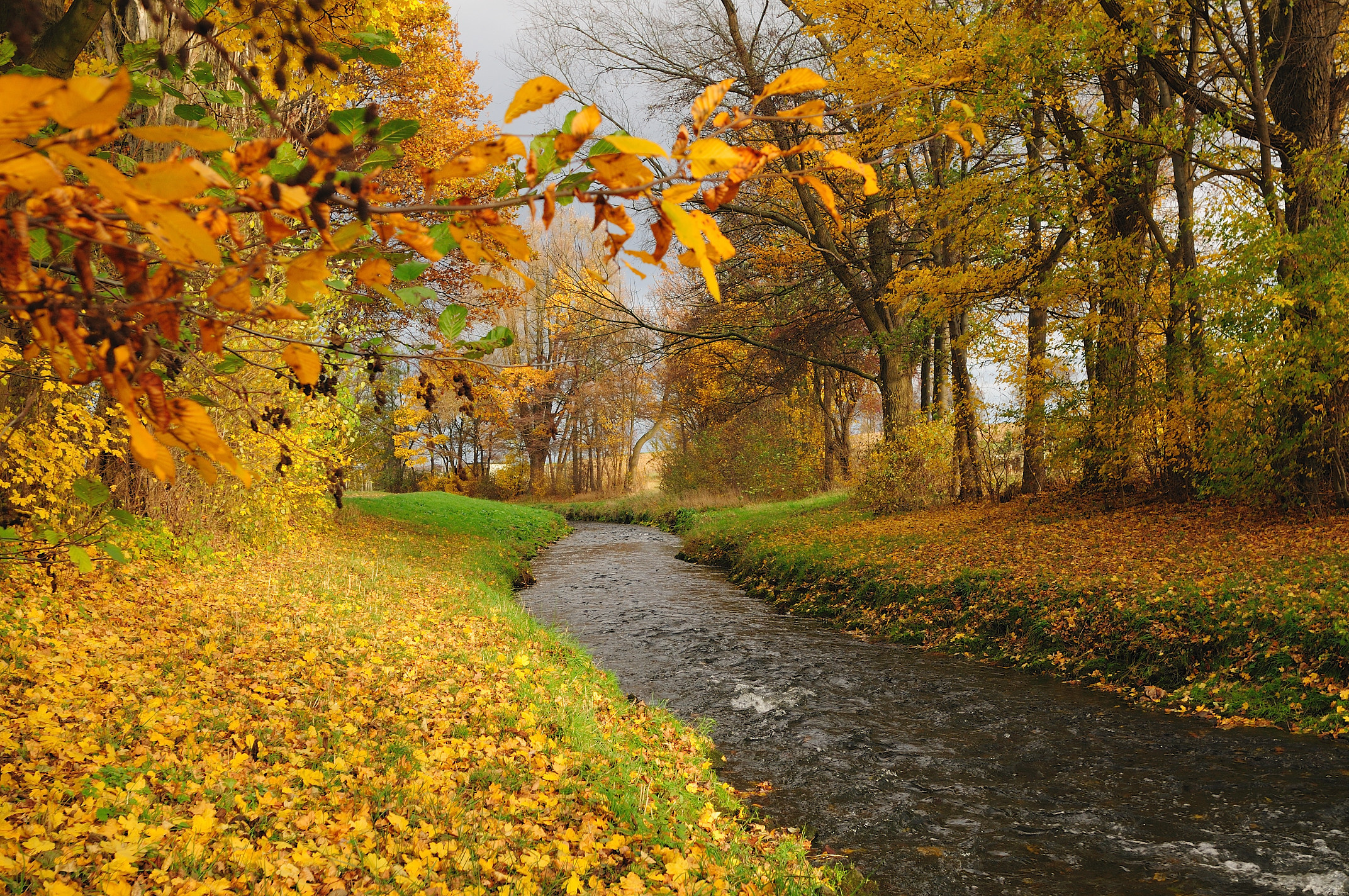 Autumn River Forest HD Desktop Wallpaper, Instagram photo ...