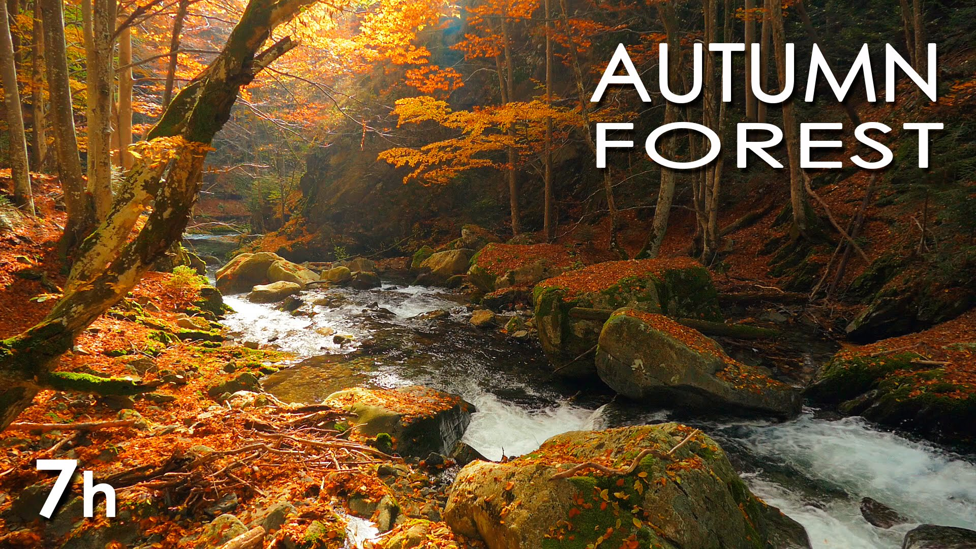 Autumn Forest - Relaxing Nature Video - River Sounds - White Water ...