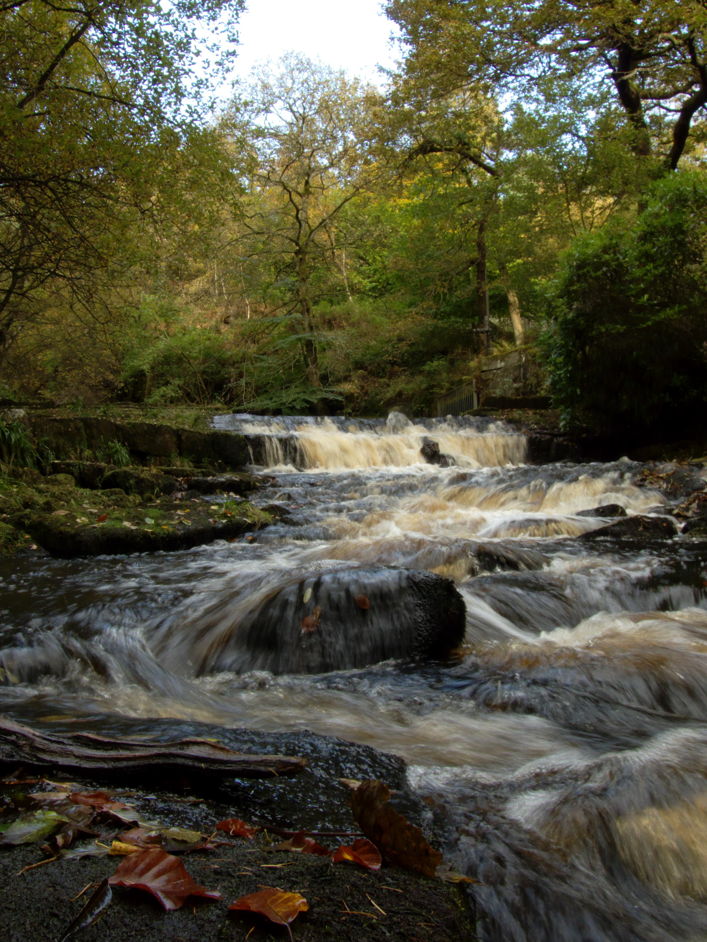 Autumn River, Stream, Water, River, Nature, HQ Photo