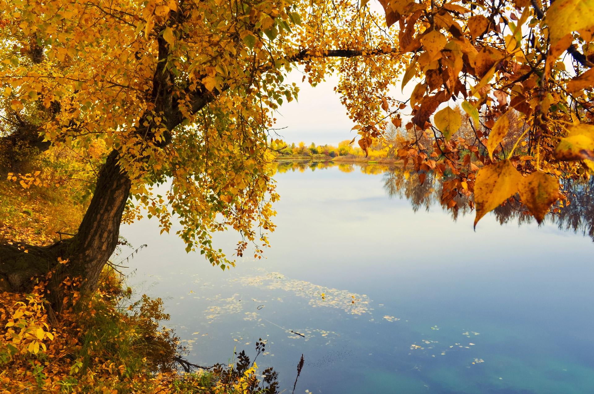 Autumn River Bank Free Stock Photo - Public Domain Pictures