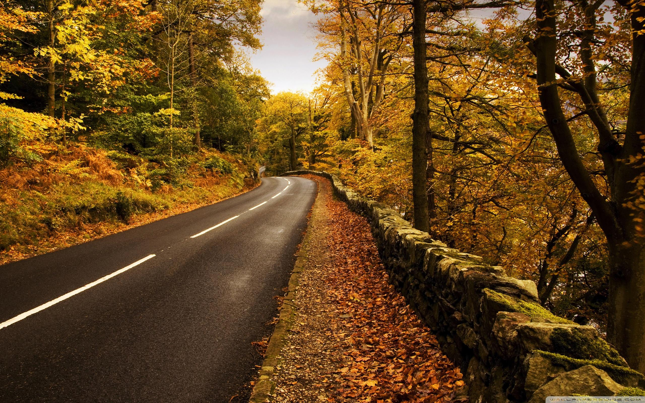 Free Photo Autumn Road
