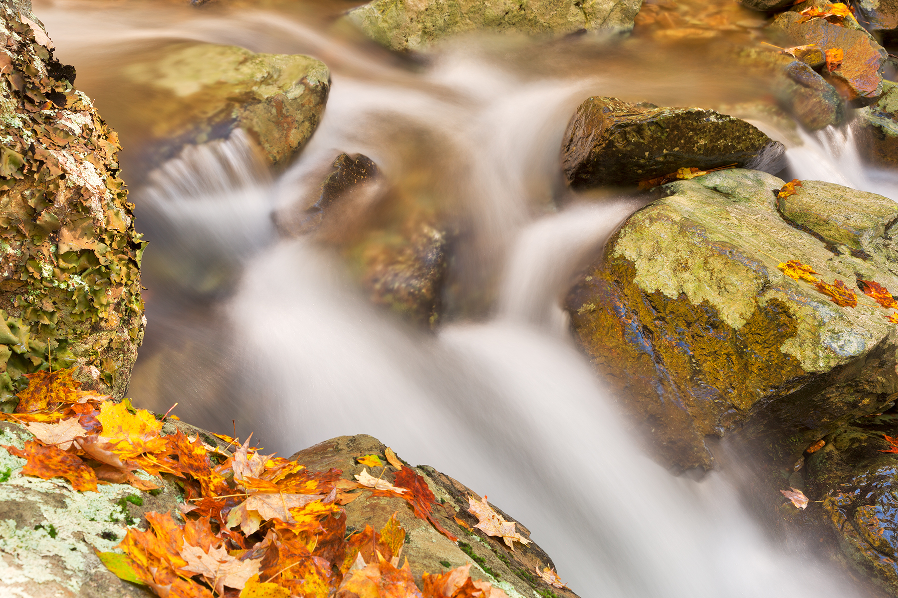 Autumn rose river stream - hdr photo