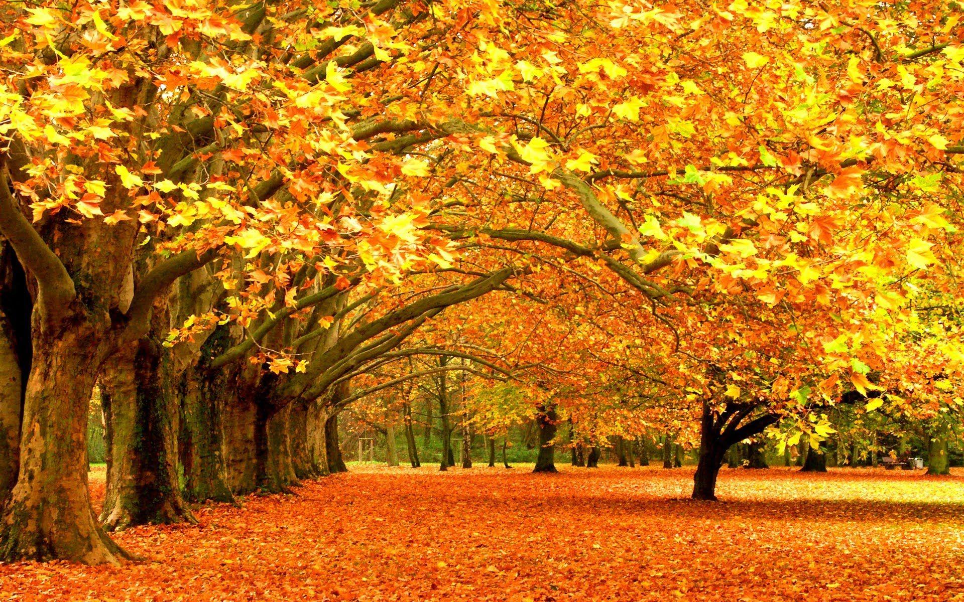 Autumn Scene & Kiss the Rain - Yiruma's piano music. Poems by Nhật ...
