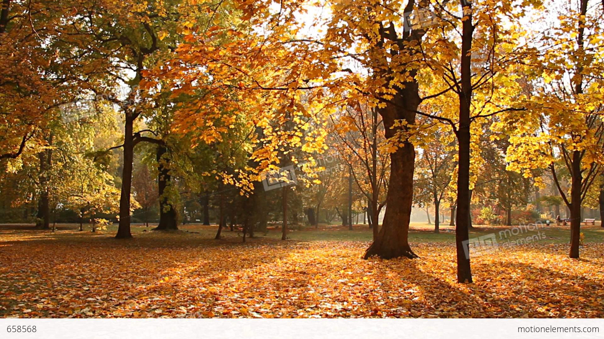 Beautiful Autumn Scene Elm 05 Falling Leaves Stock video footage ...