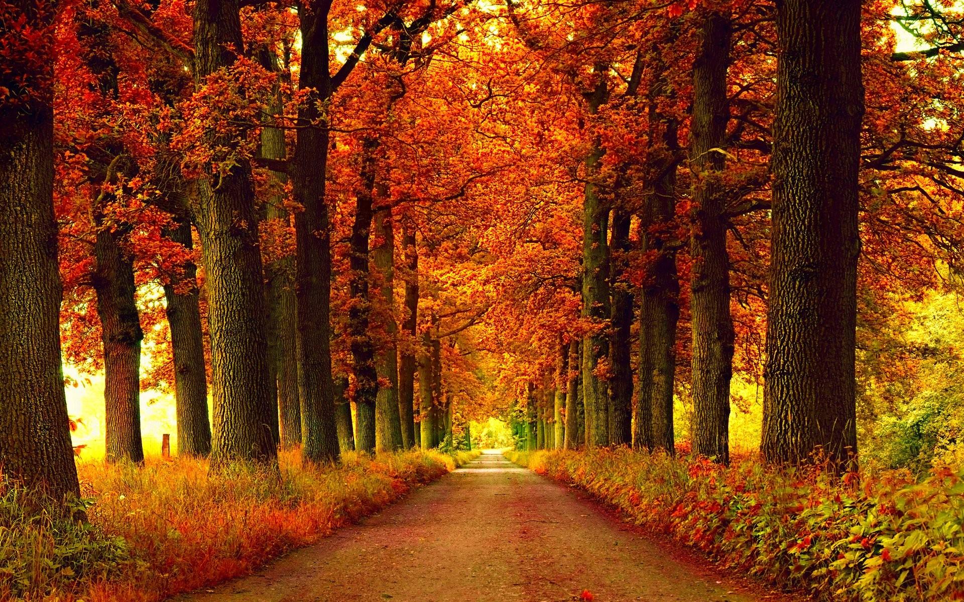 Leaves: Forest Season Fall Nature Leaf Tree Autumn Seasons Leaves ...
