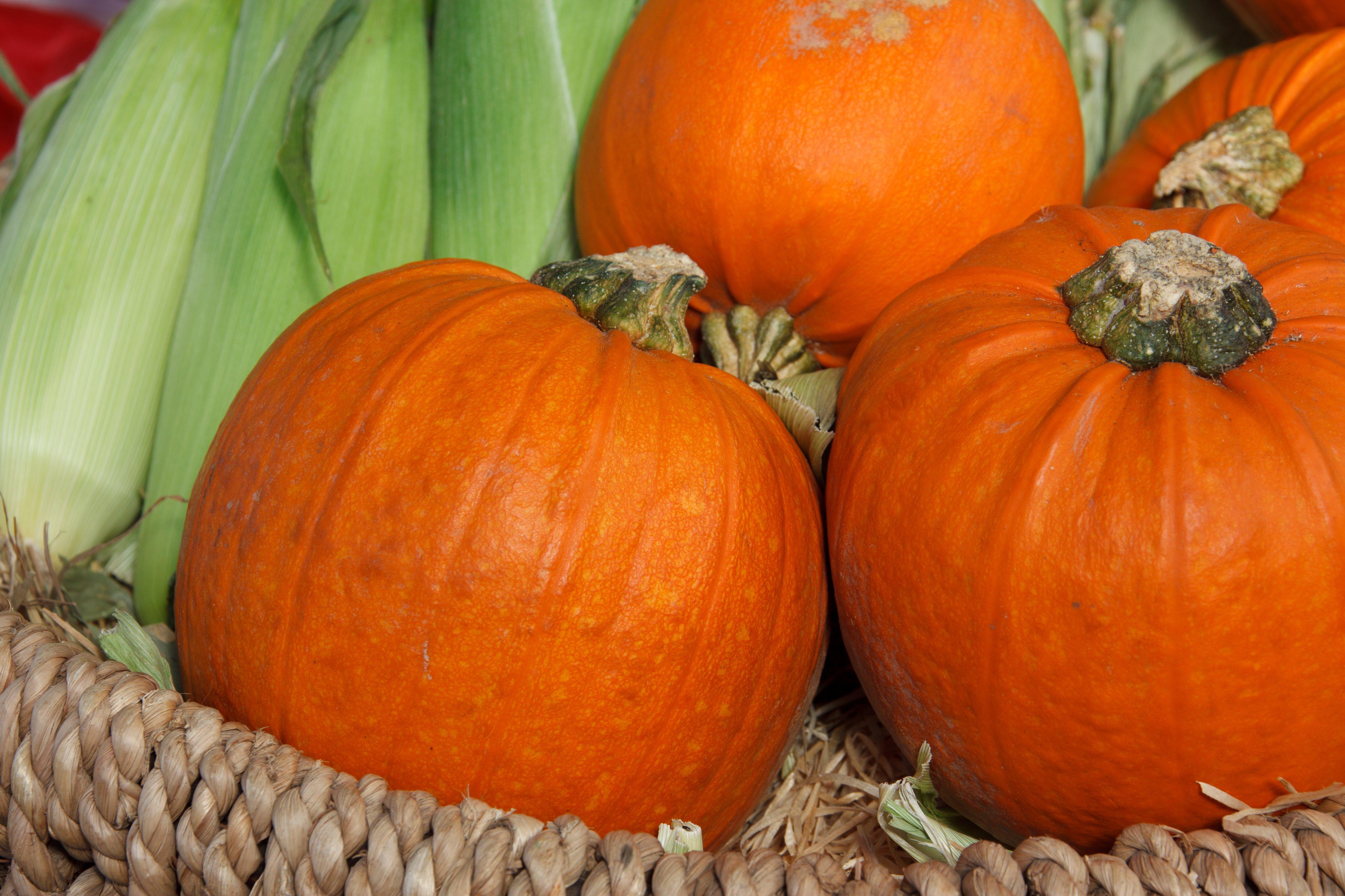 Autumn season photo