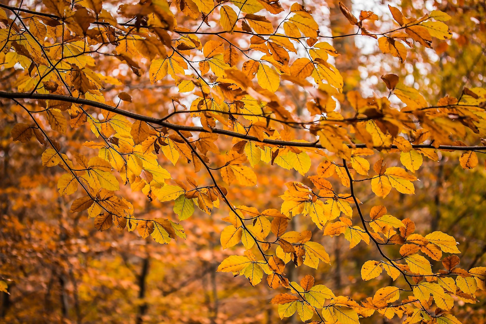 Autumn Season, Autumn, Dry, Fall, Fallen, HQ Photo