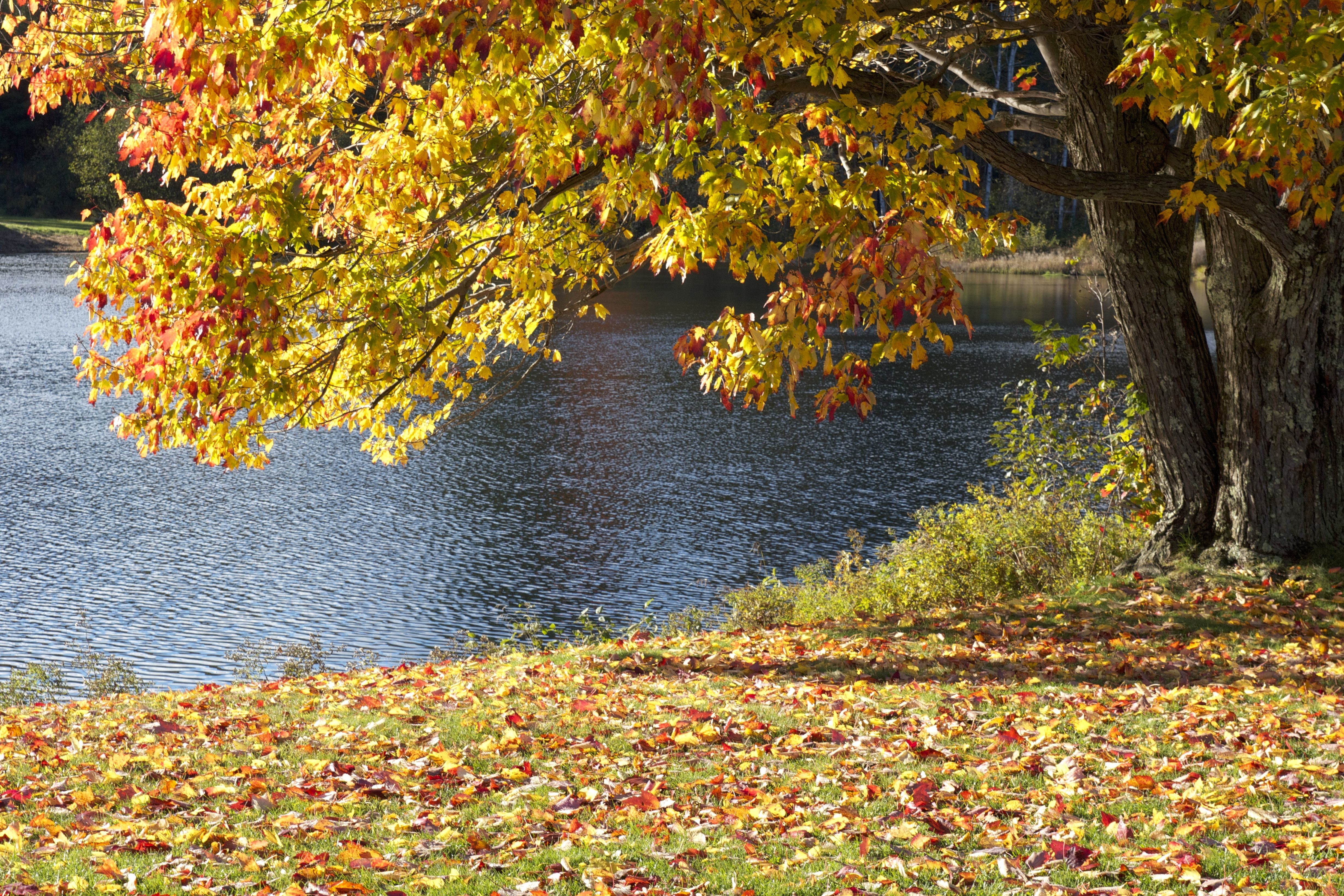 Free picture: autumn season, lake, trees, water, fall, foliage ...