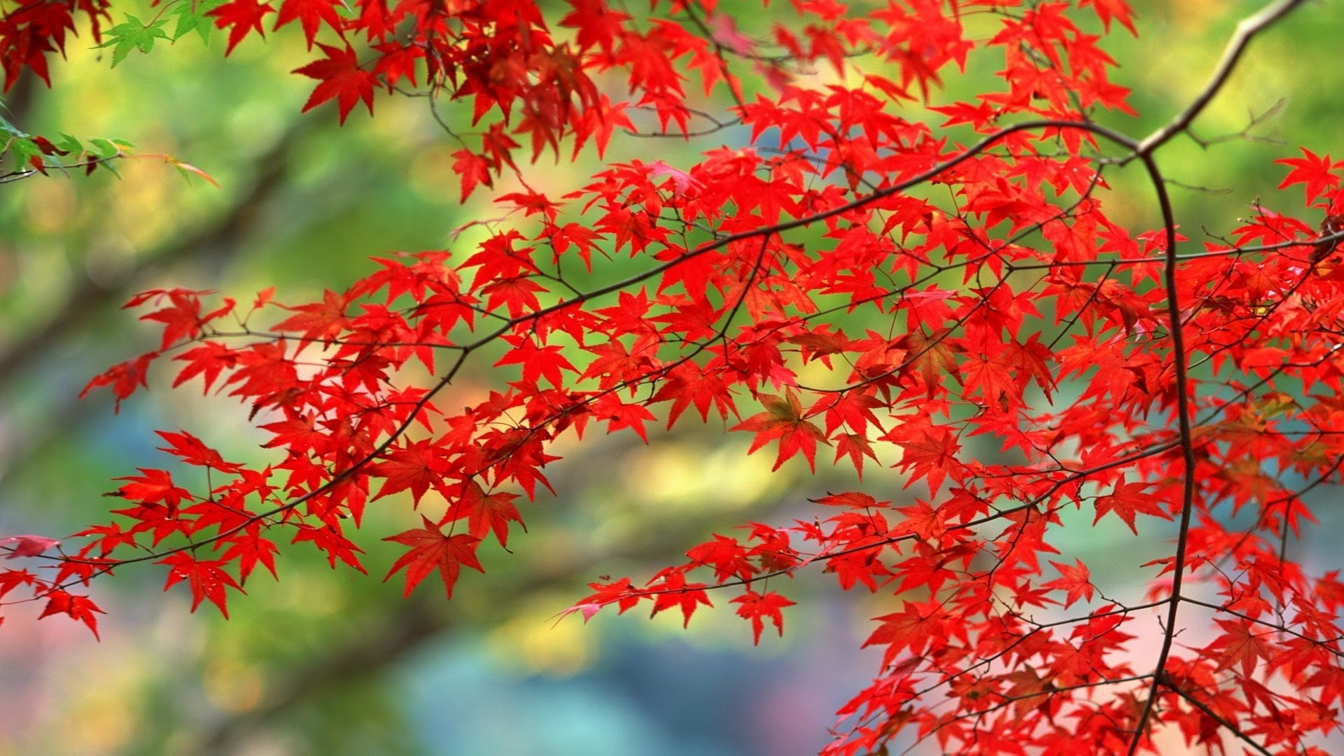 Autumn season - YouTube