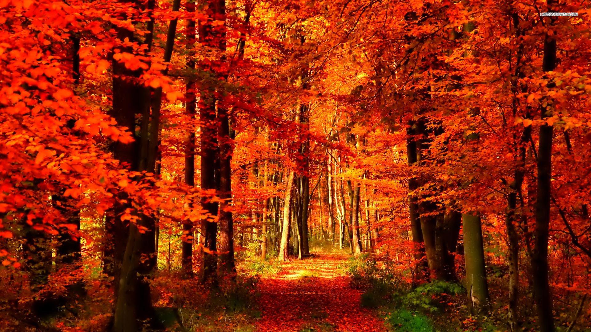 autumn season   The Hare Krishna Movement