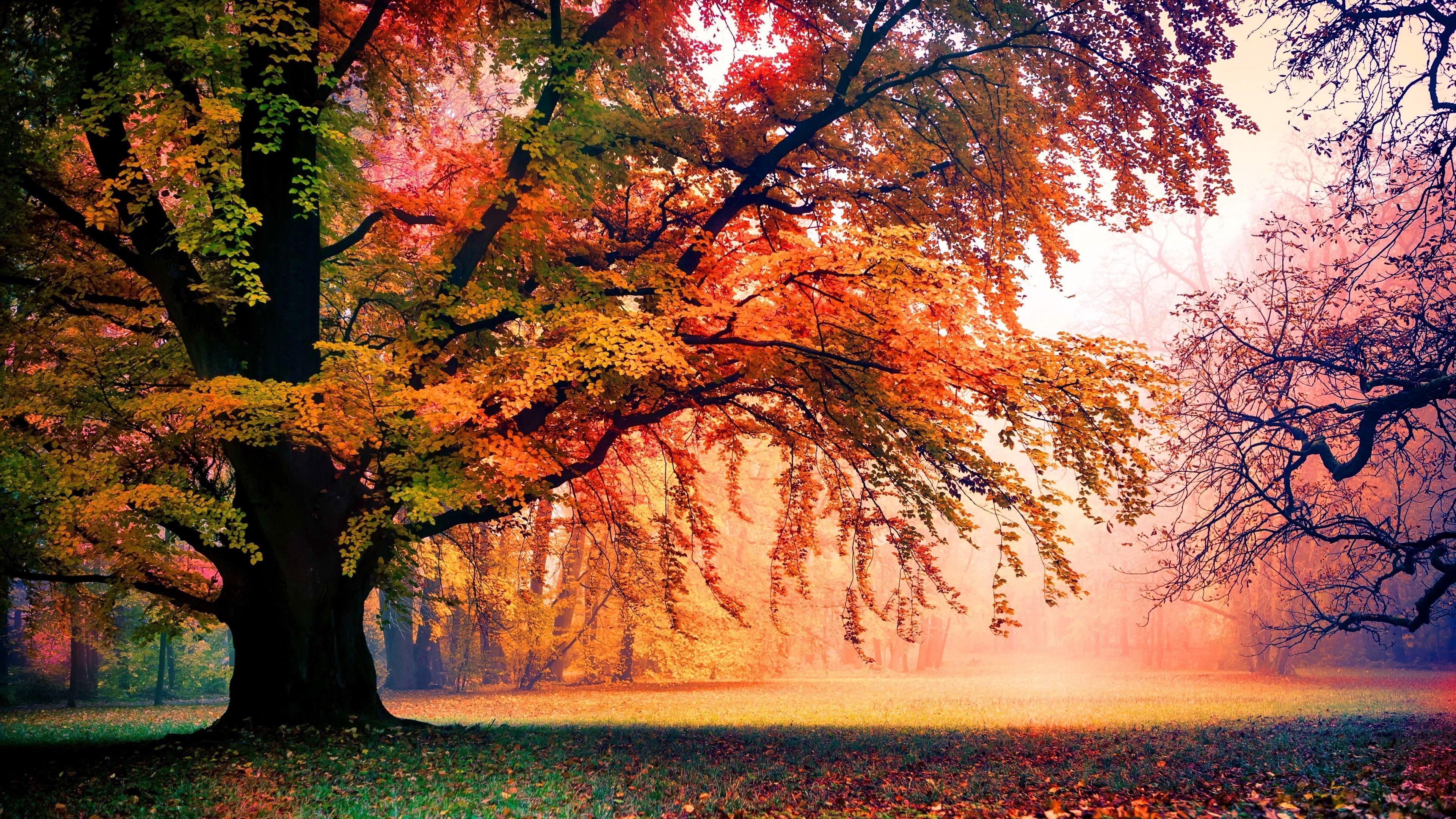 Colorful Autumn Trees Wallpaper   Wallpaper Studio 10   Tens of ...
