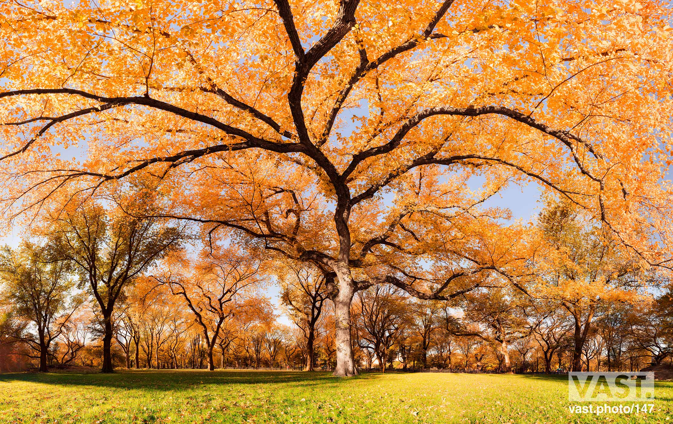 Autumn Foliage & Trees: Fine Art Photo Prints - VAST
