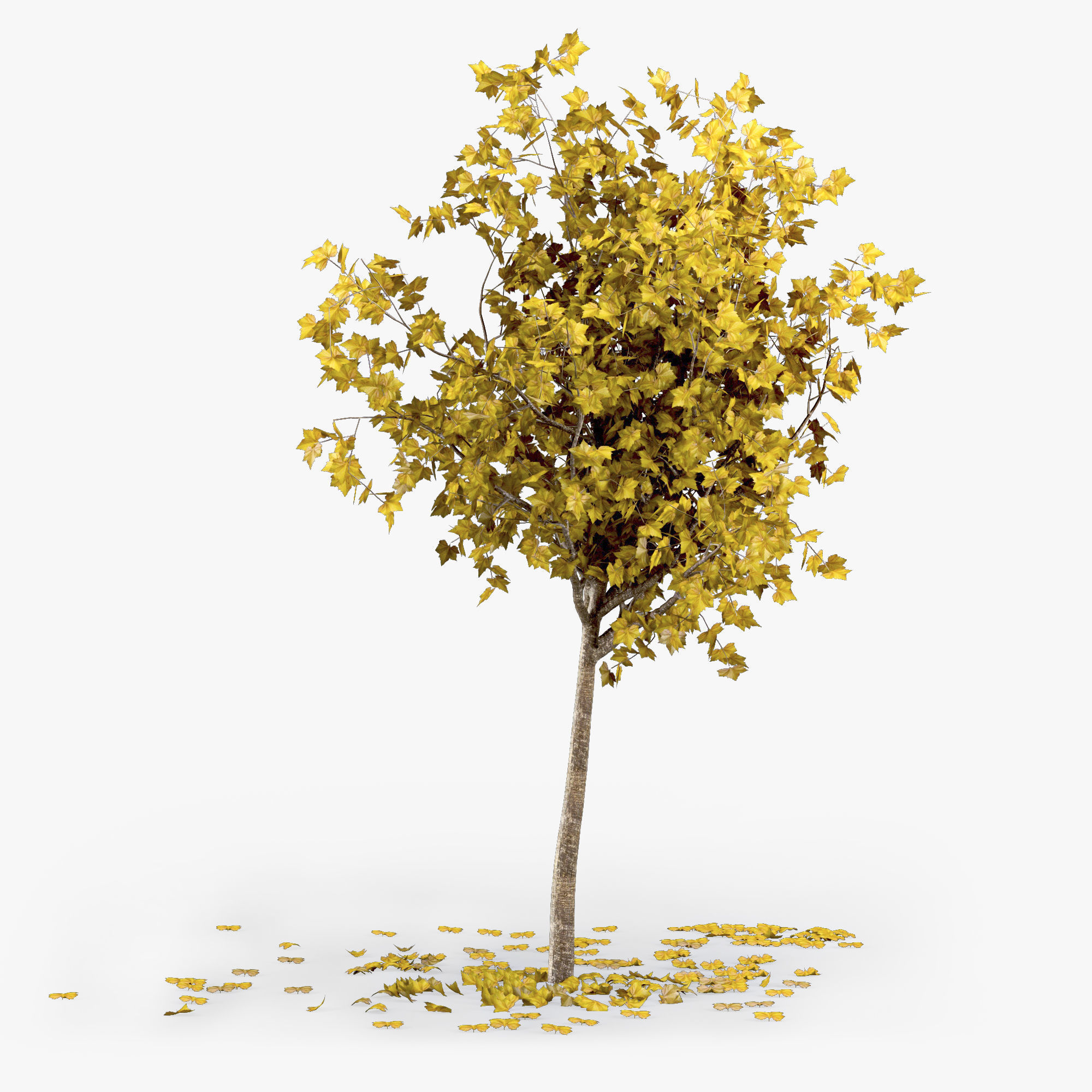 other 3D Autumn Tree   CGTrader
