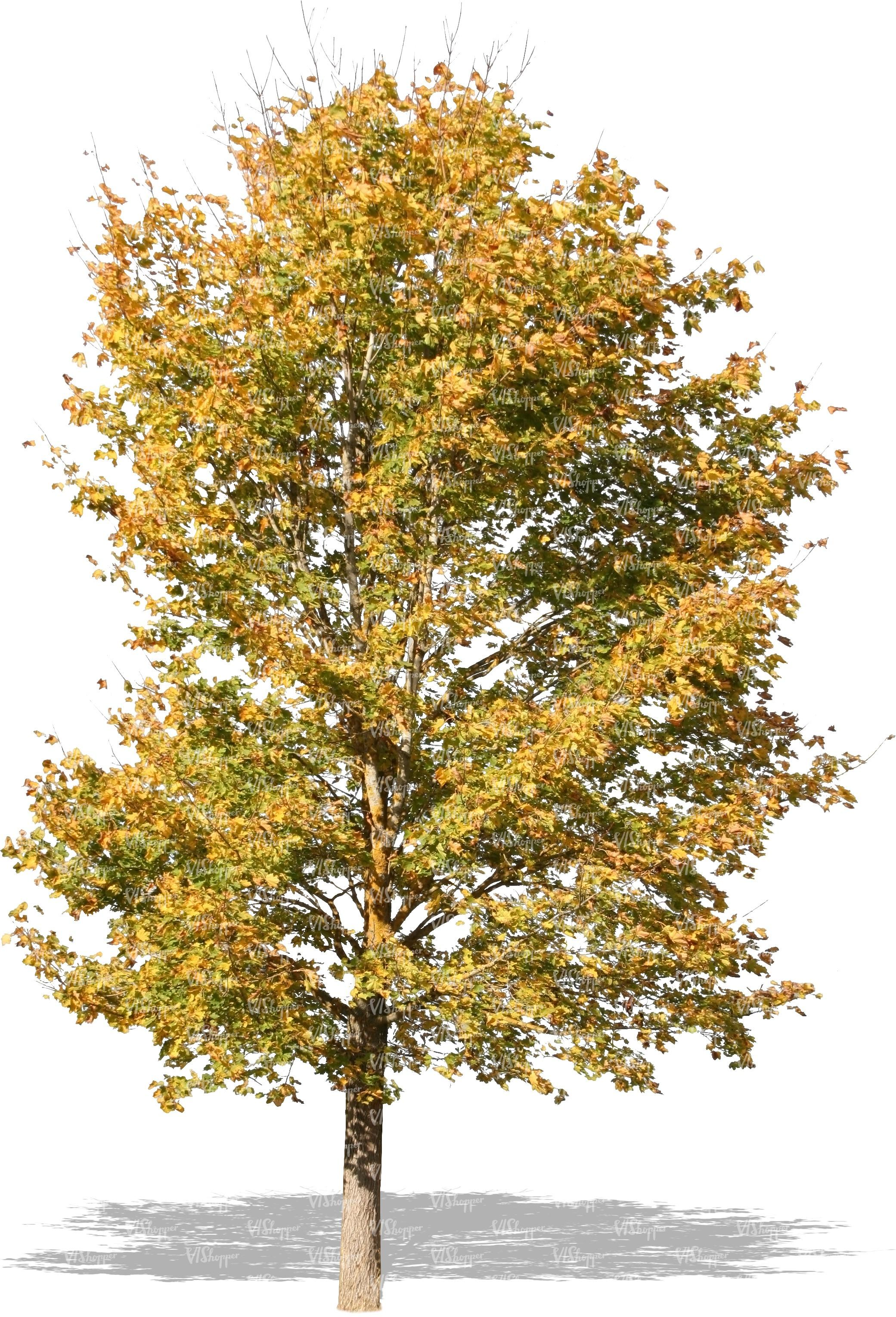 cut out autumn tree - cut out trees and plants - VIShopper