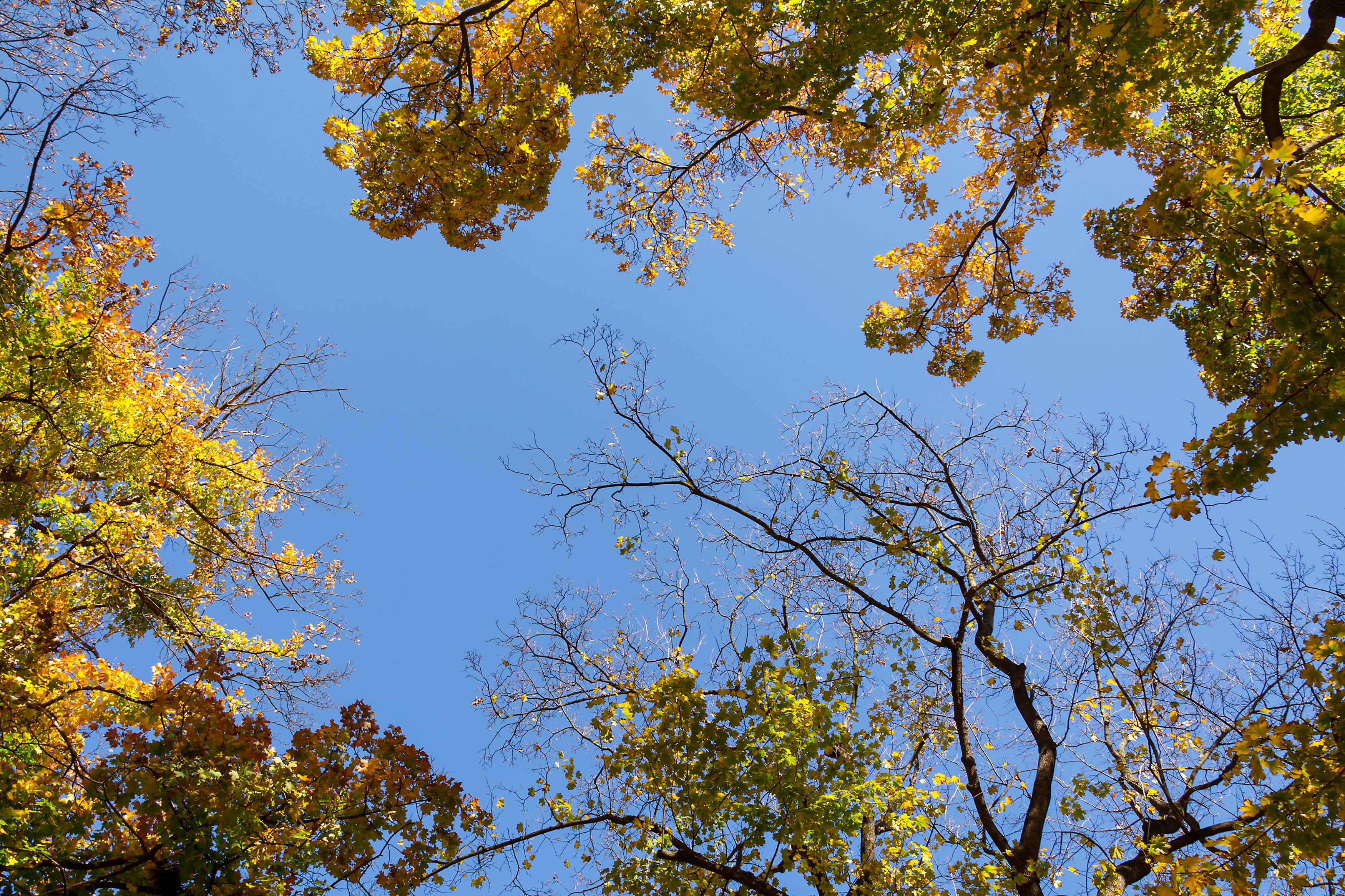 Free Image: Autumn Tree Crowns   Libreshot Public Domain Photos