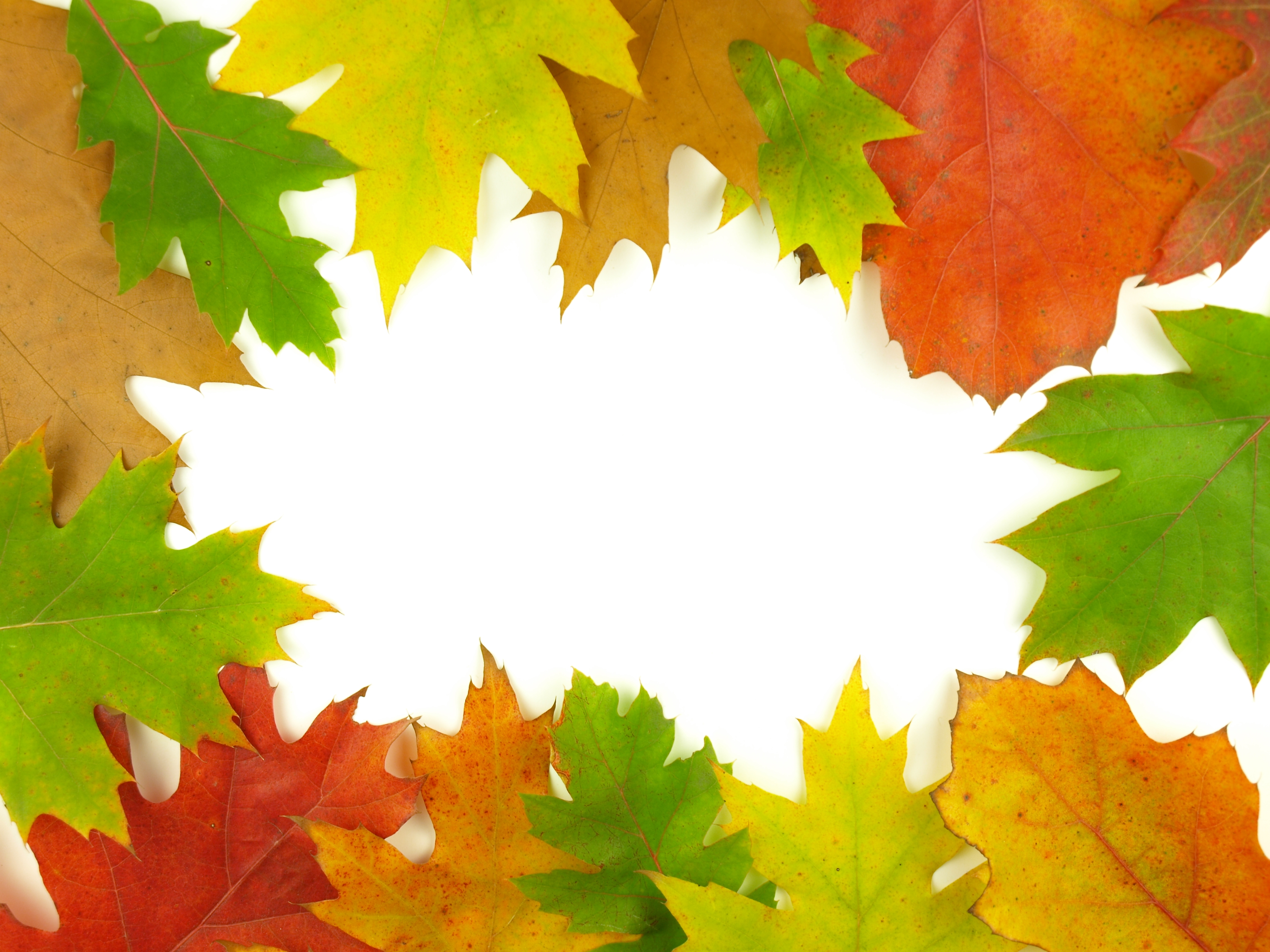 Autumn very close photo