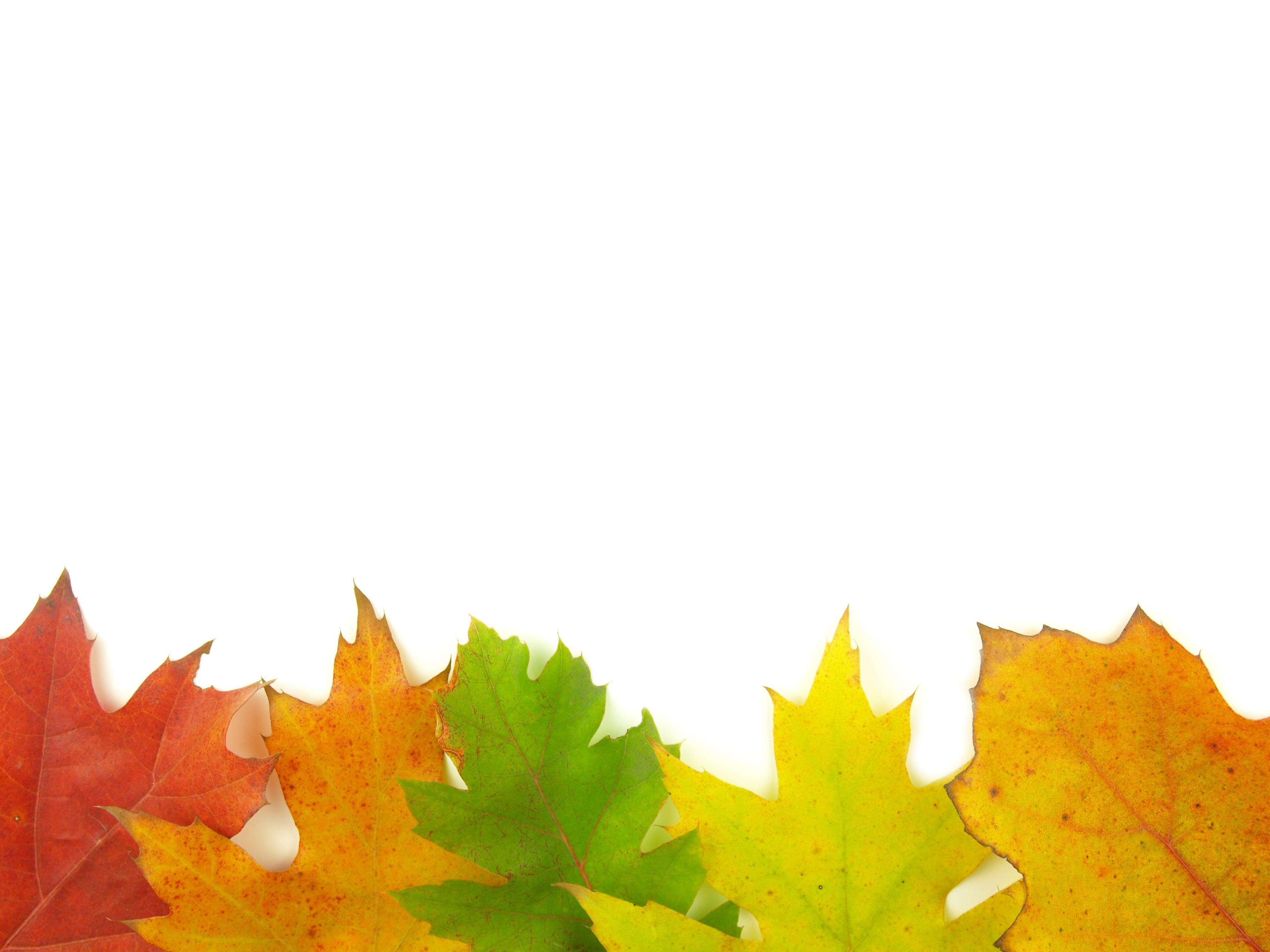 Autumn very close, Autumn, Orange, White, Trees, HQ Photo