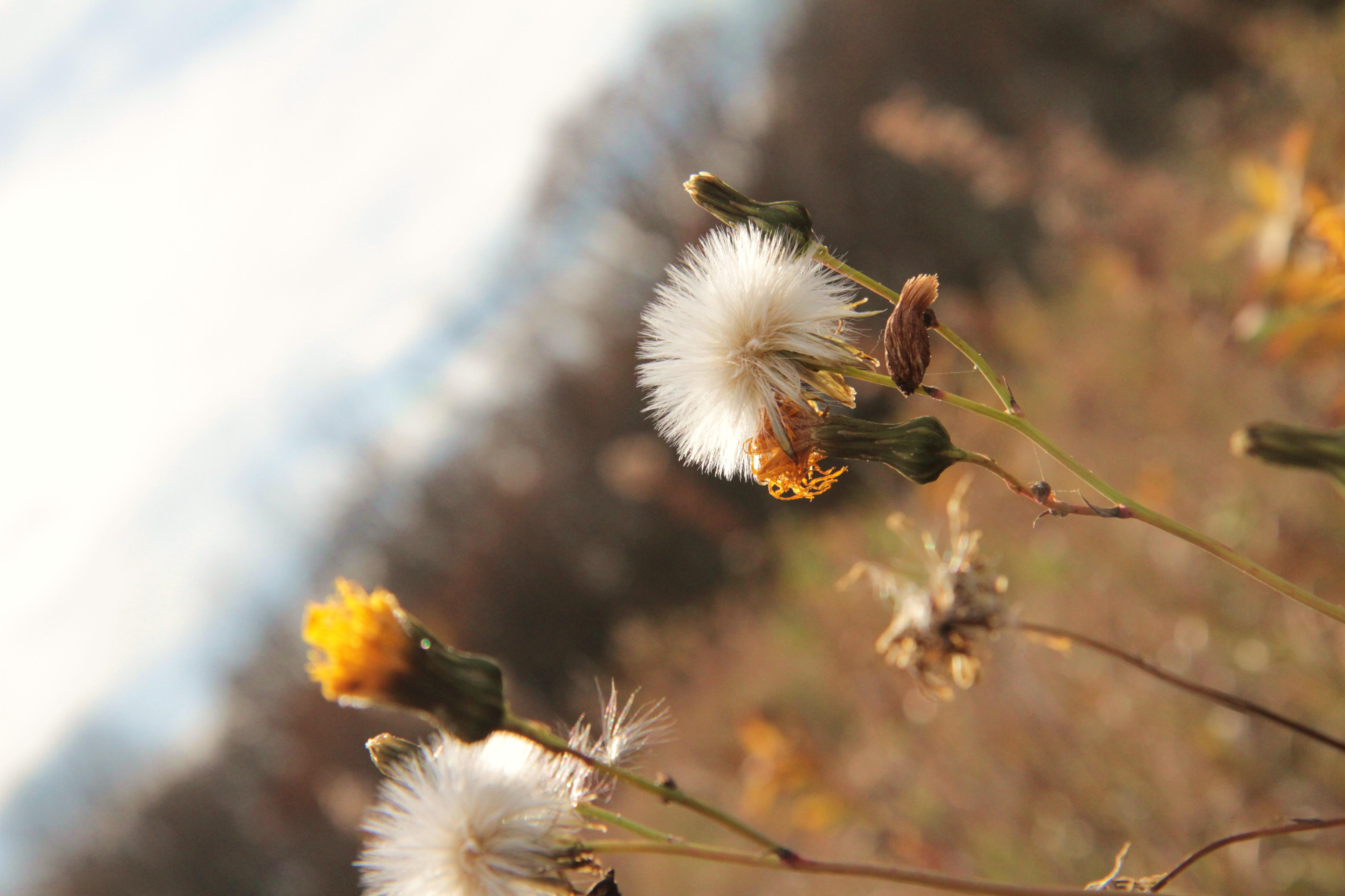 Autumn Weeds – Mari Kivisto