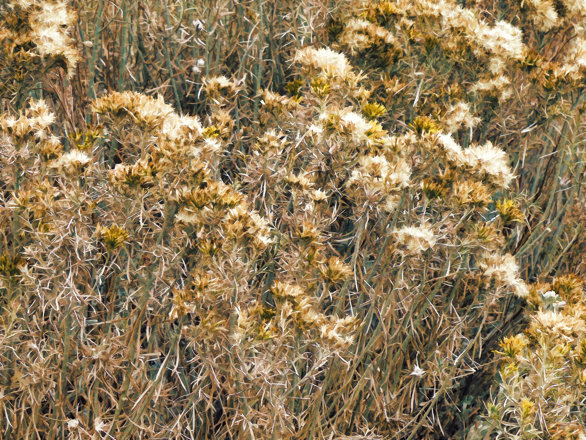 Autumn Weeds Free Stock Photo - Public Domain Pictures