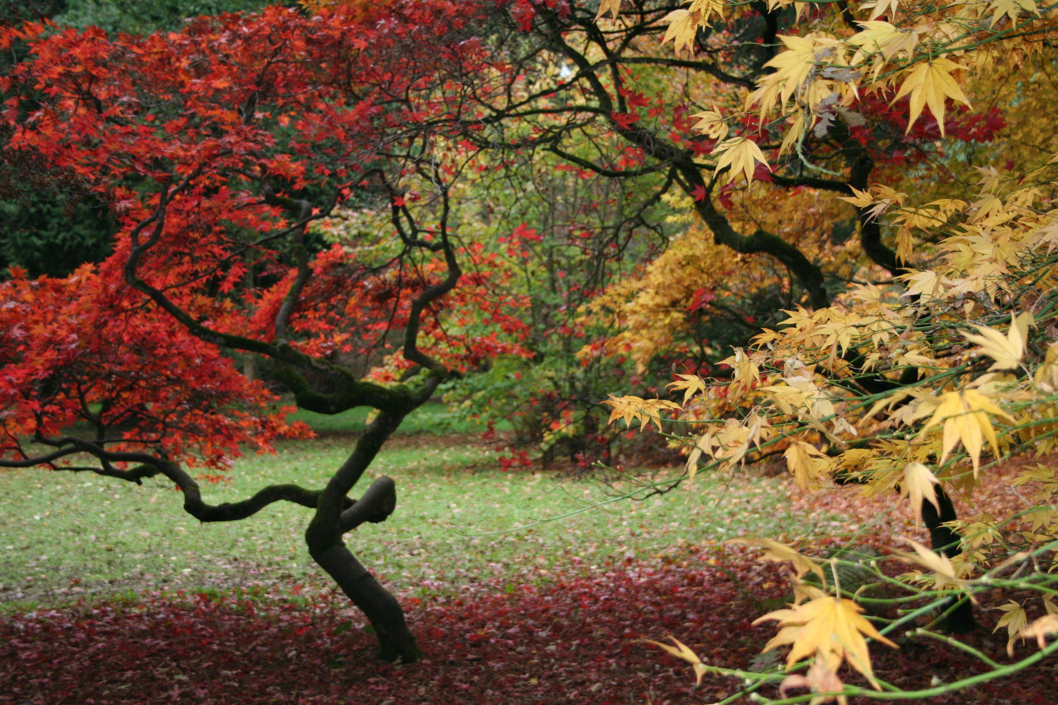 Westonbirt Arboretum Autumn Colours 2013