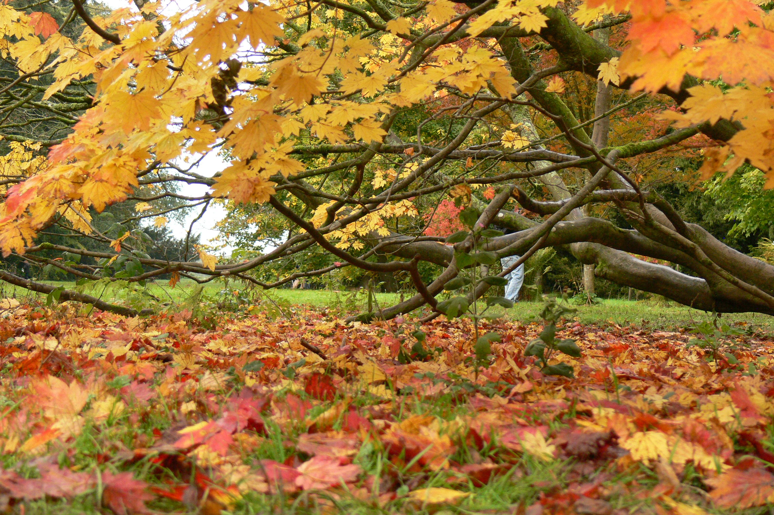Westonbirt Arboretum | squarebluebox