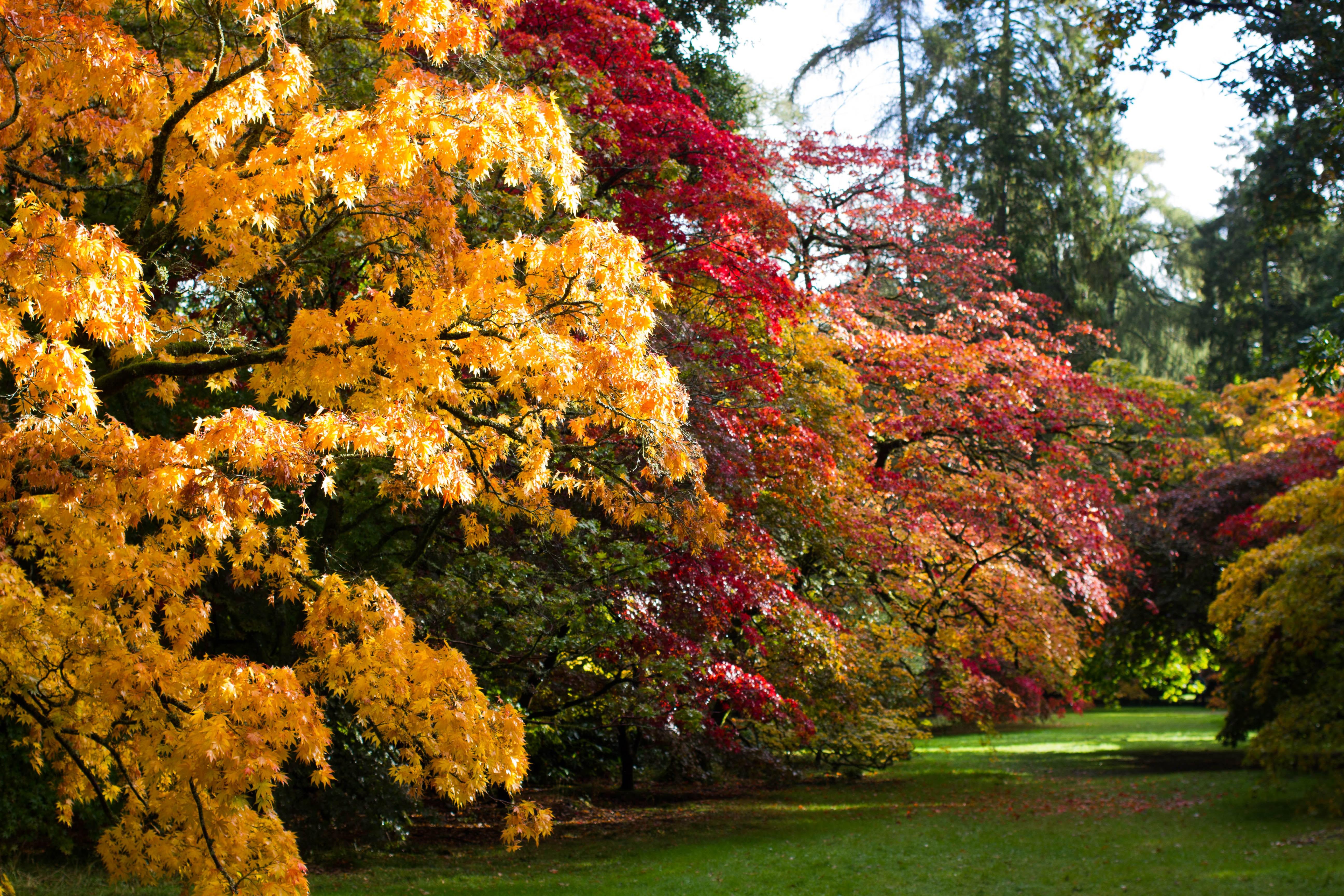 Autumn Adventures at Westonbirt Arboretum - Jaye Rockett