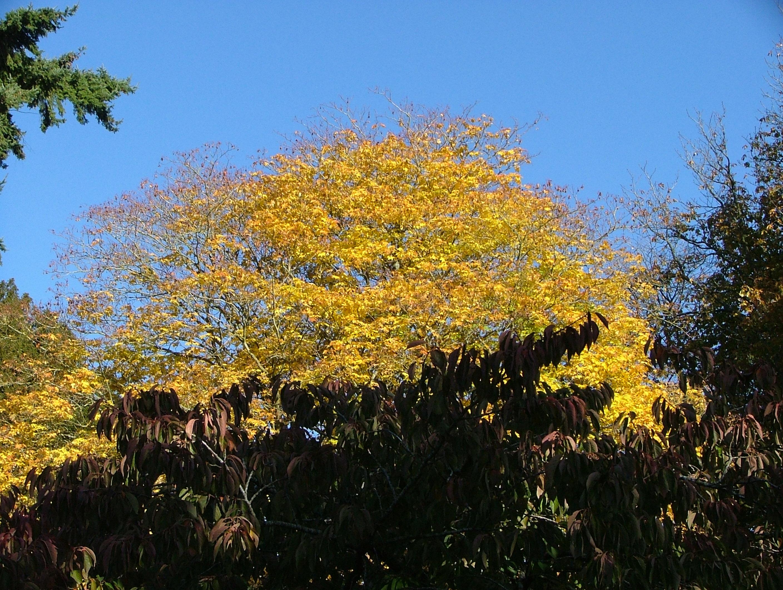 Autumn - Westonbirt, Arboretum, Autumn, Nature, Trees, HQ Photo