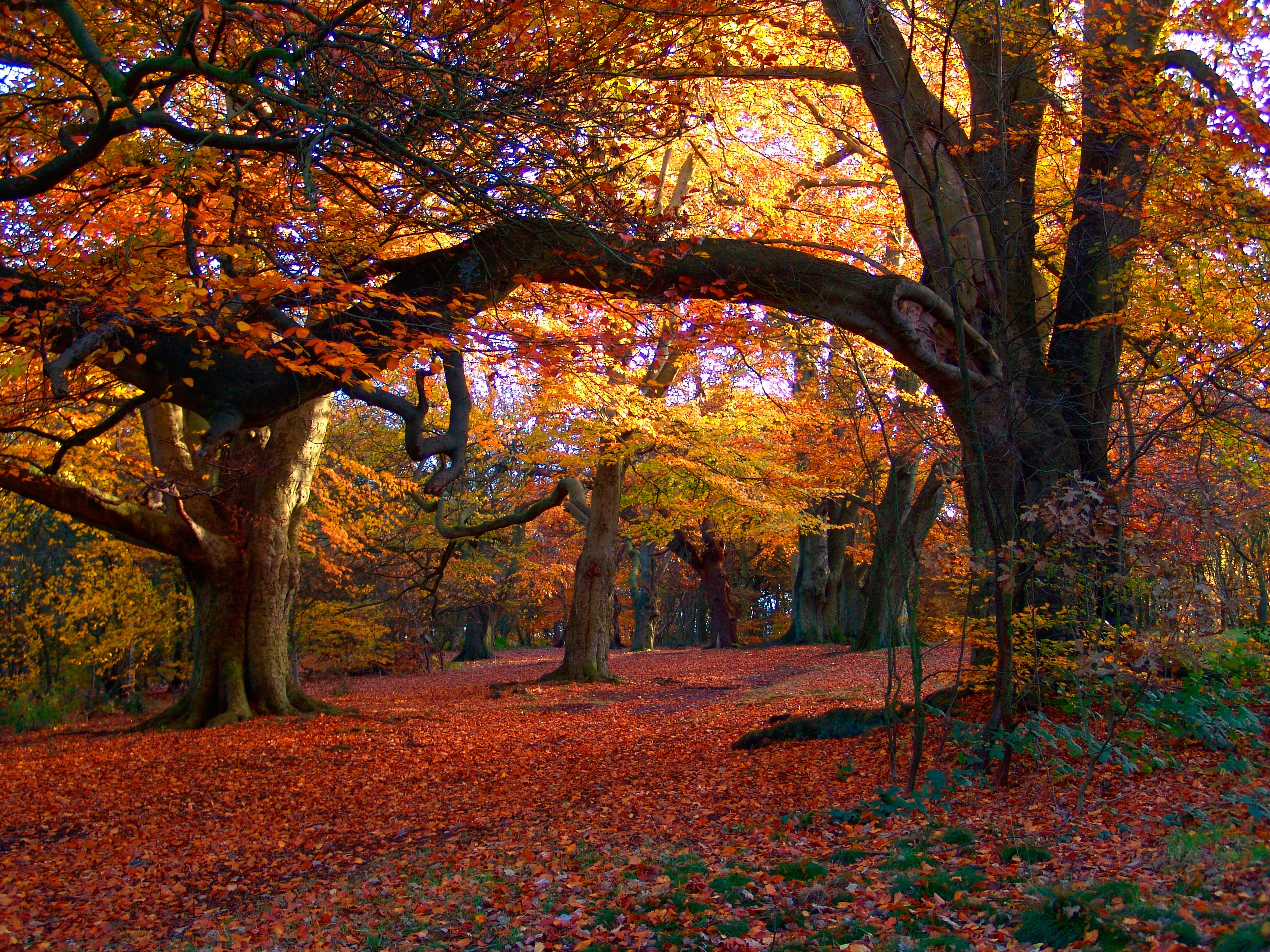 Cannock Autumn Woods | Global Yodel