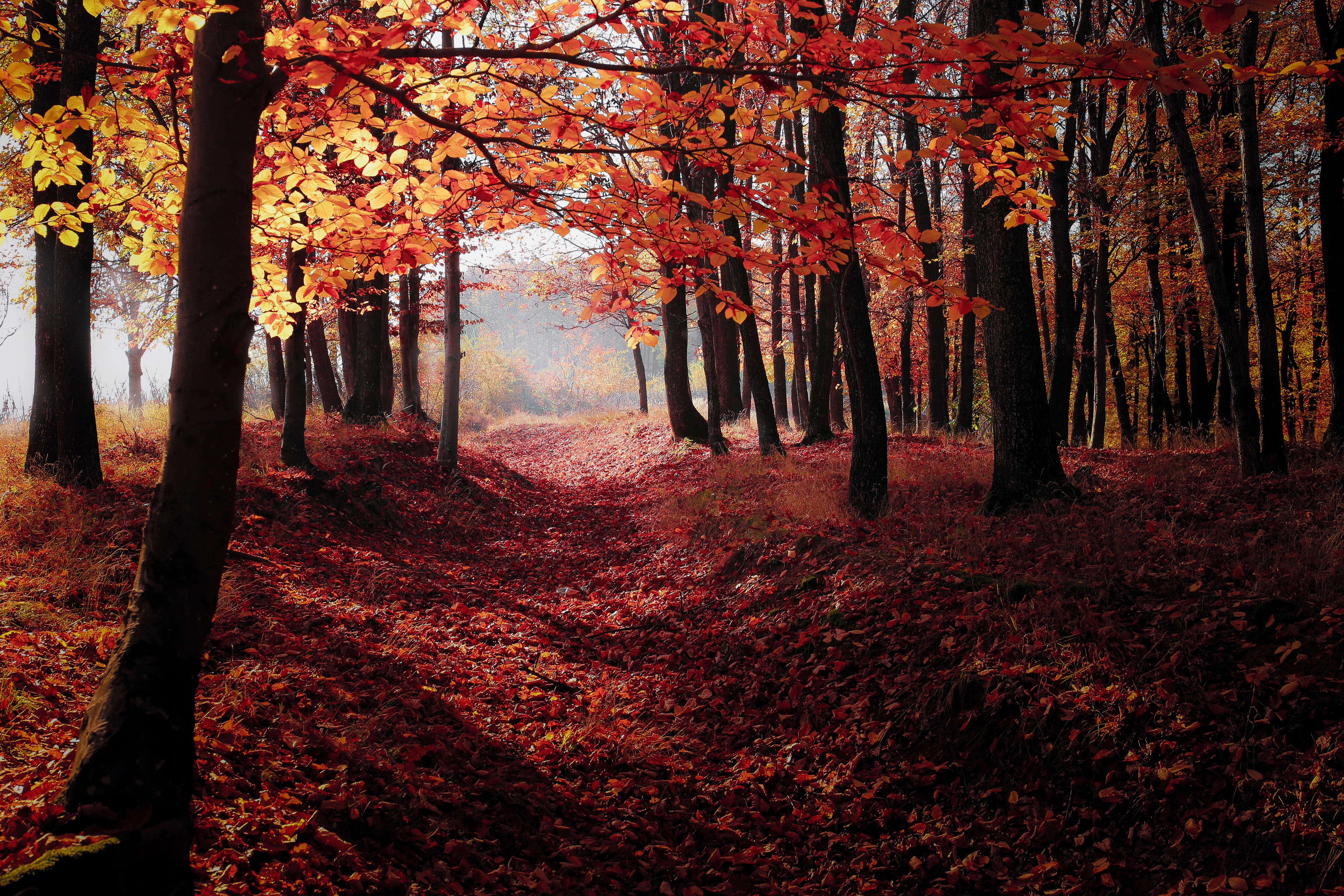 Autumn woods photo