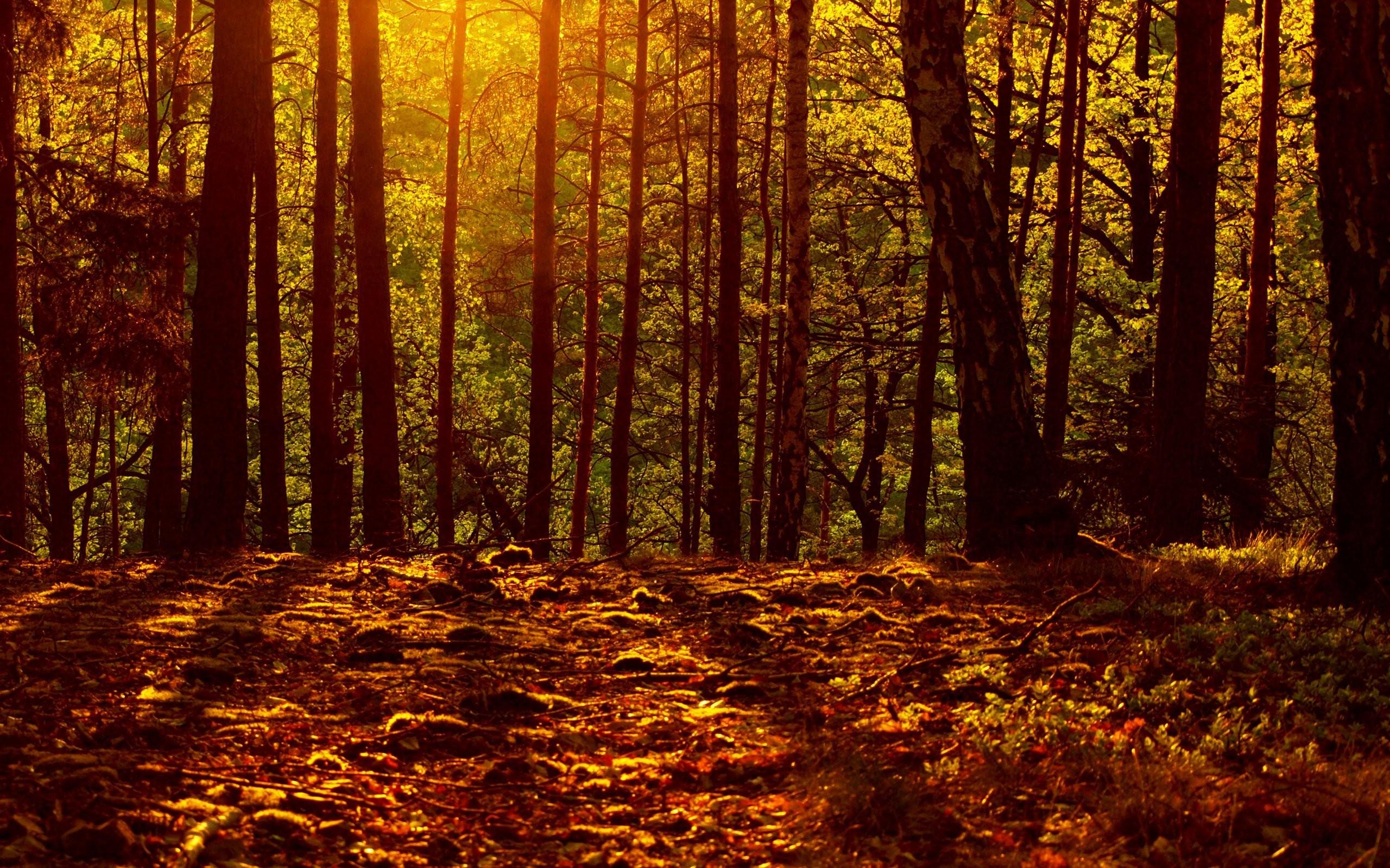 Free Photo Autumn Woods Autumn Dying Grass Free