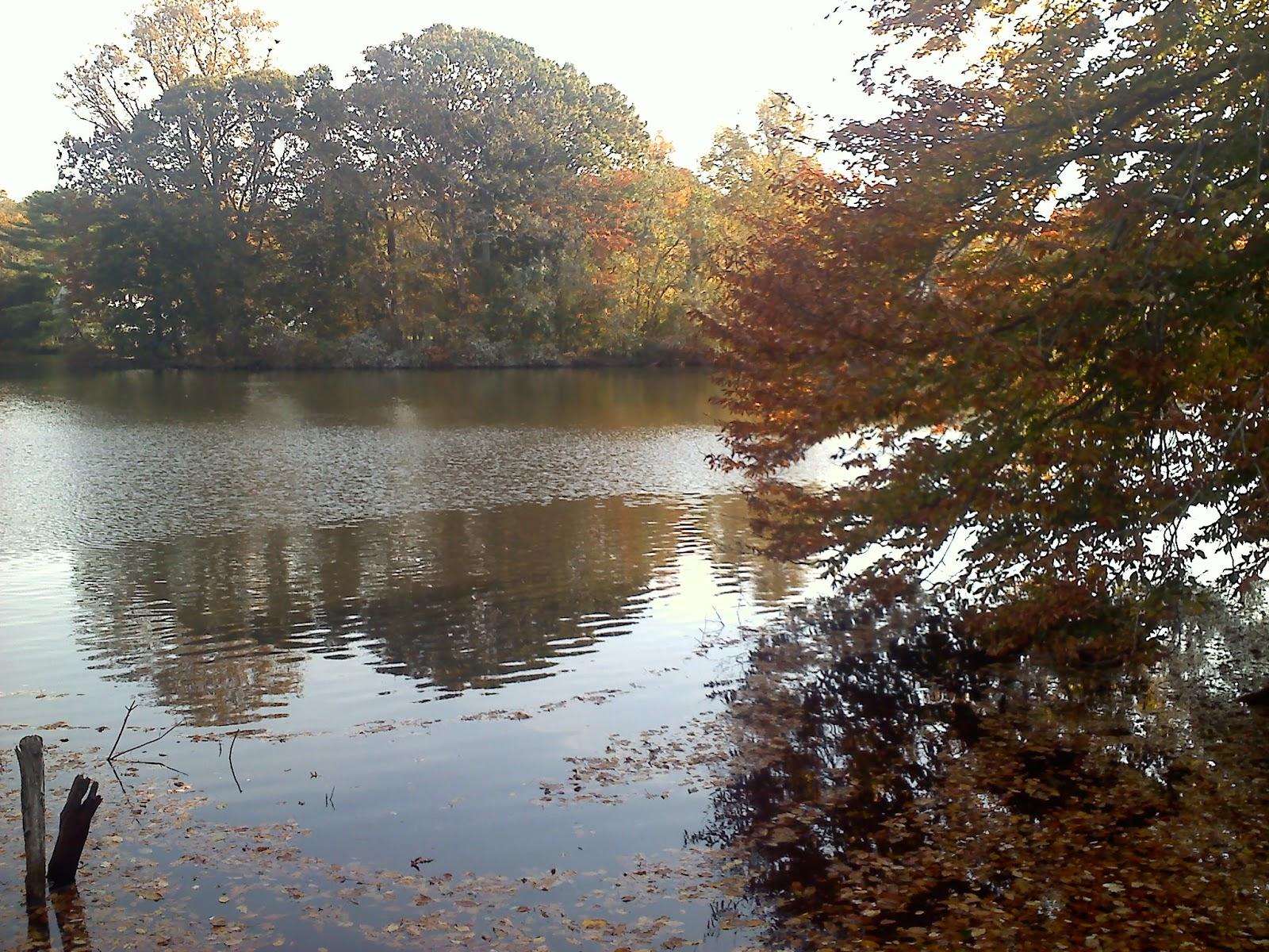 Homemade on Long Island: Avalon Park and Preserve