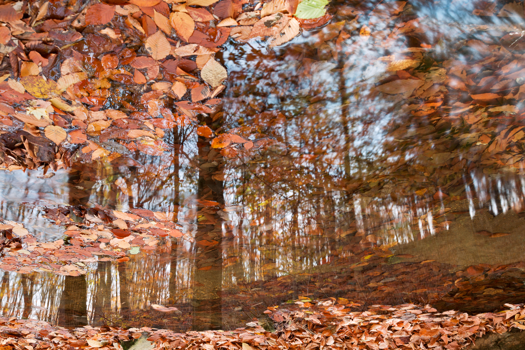 Avalon Fall Reflections, Scenery, Scenic, Season, Scene, HQ Photo