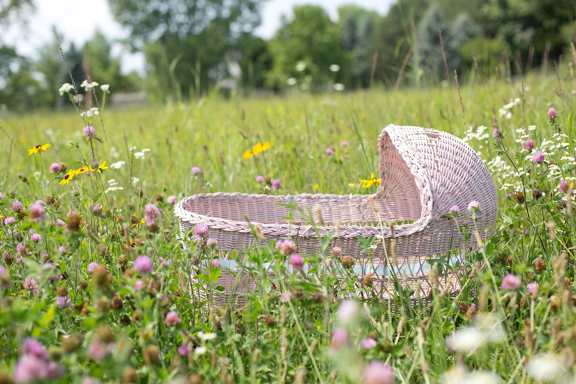 Baby Bassinet in the Garden, Garden, Object, Wild, Wooden, HQ Photo