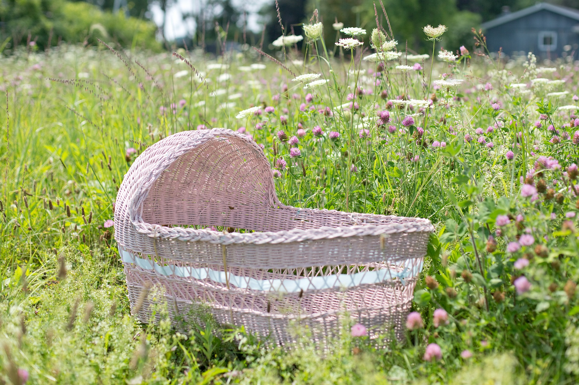Baby Bassinet, Garden, Object, Wild, Wooden, HQ Photo