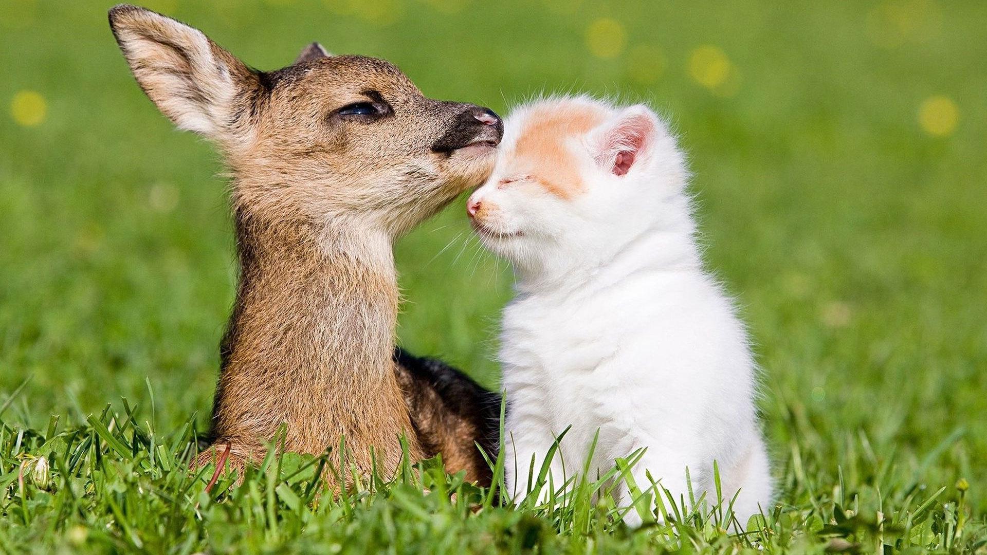 Baby deer vs kitten - Imgur