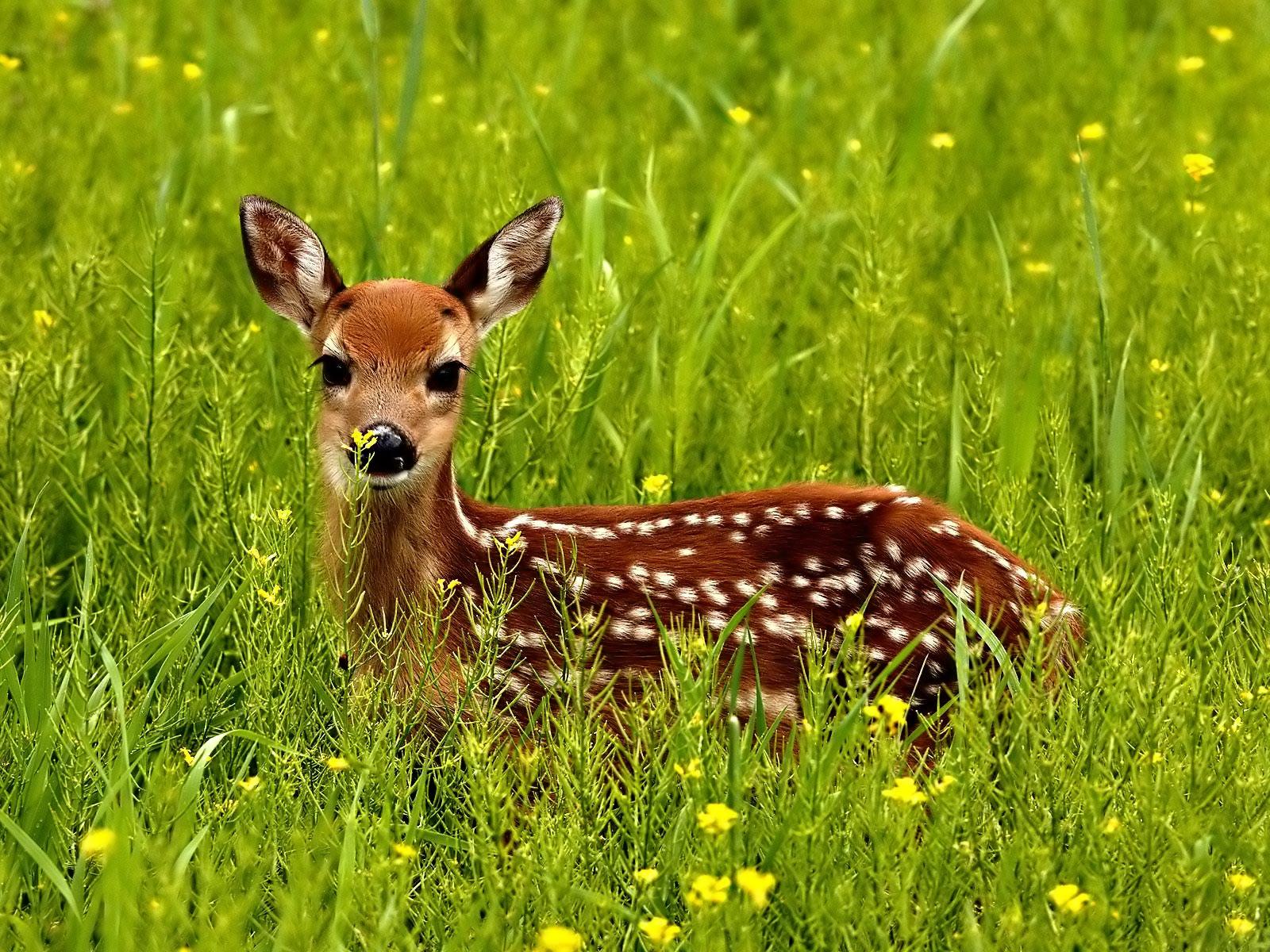 Baby deer Blank Template - Imgflip