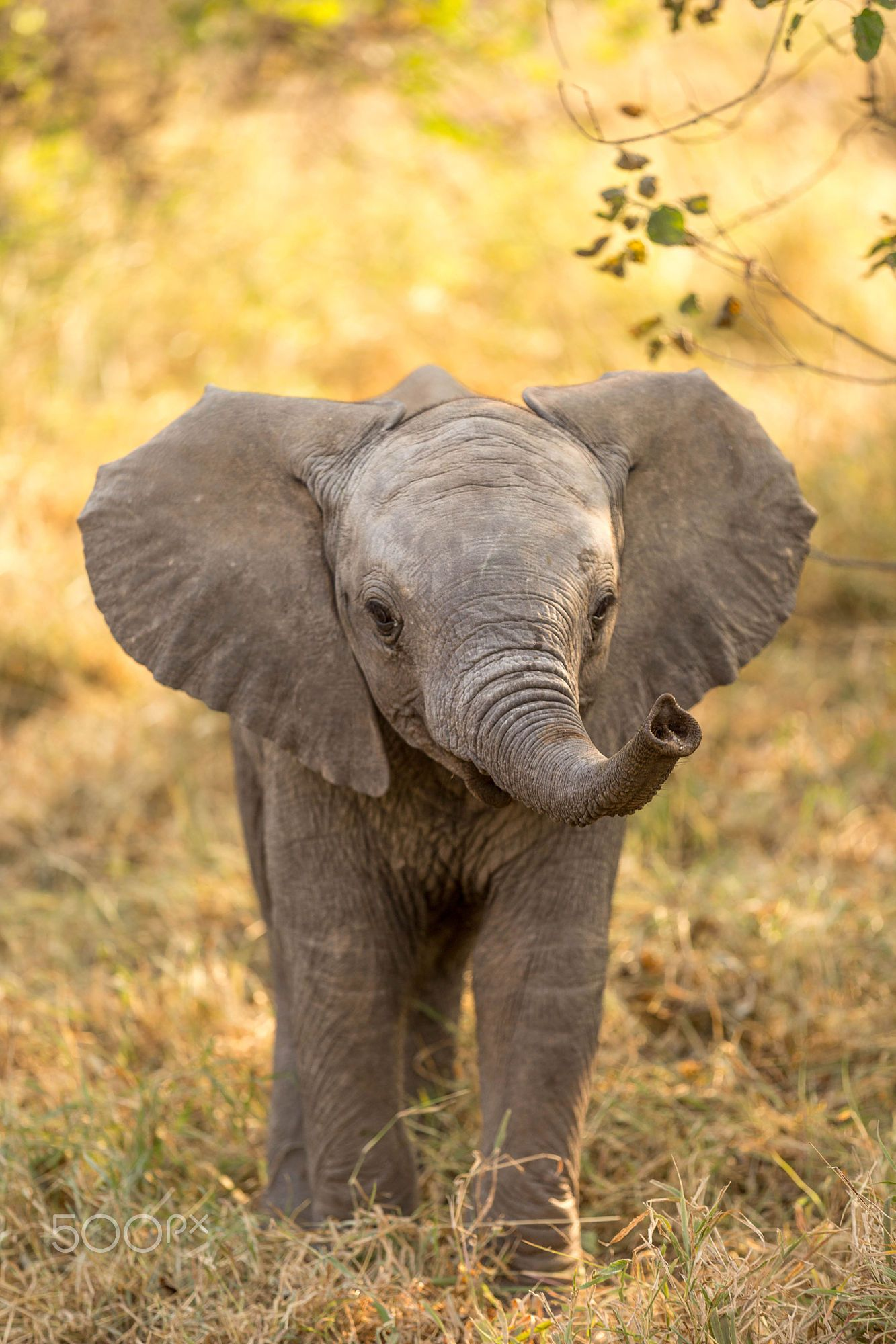 An Elephant Calf: Not Only Approachable, But Also SO Cute! (Photo ...