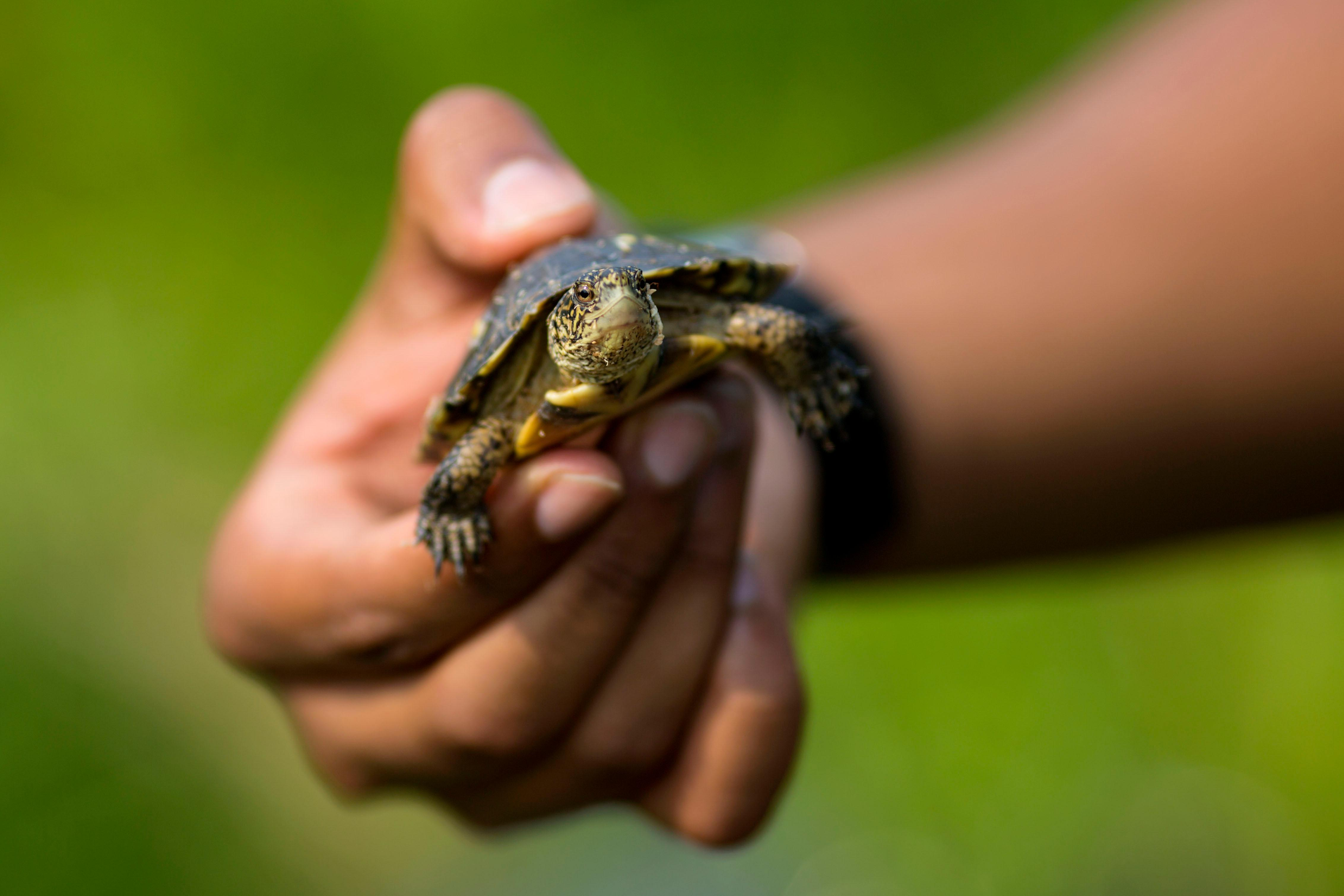 Photos: Be free! Zoo releases endangered baby turtles back into the ...