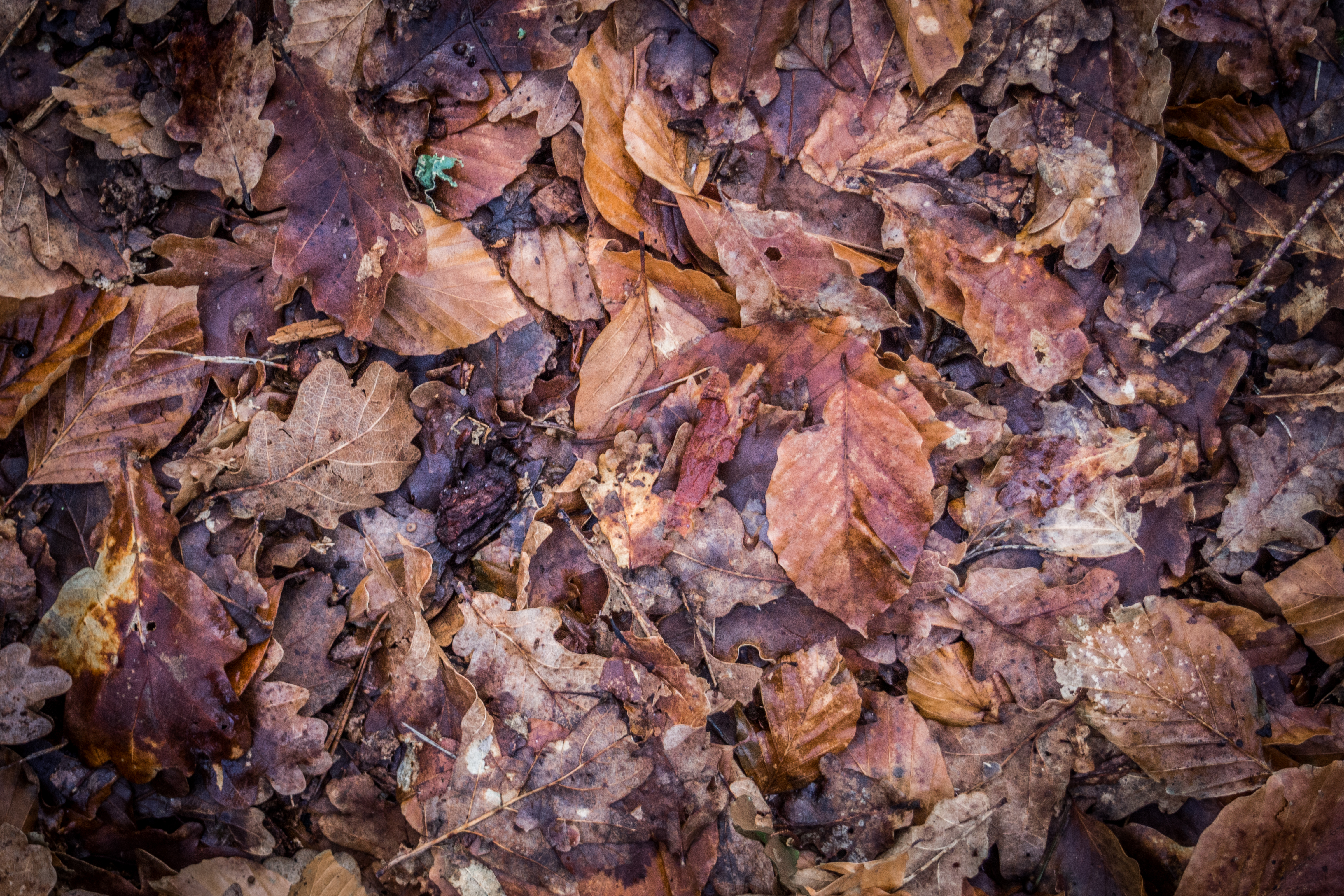 Background group autumn orange leaves, Abstract, Nature, Wallpaper, Texture, HQ Photo