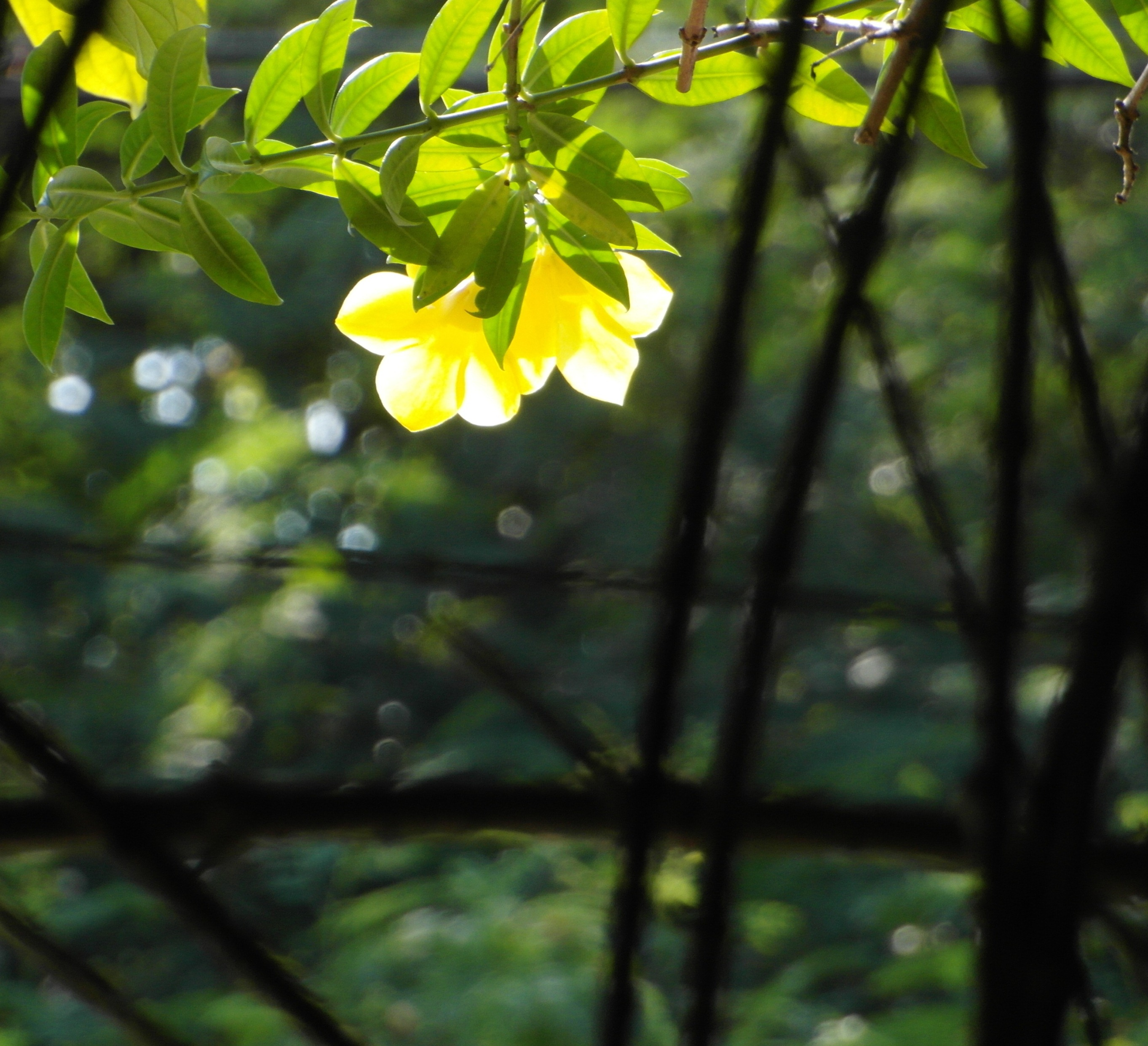 Backlit Yellow Flower, Spring, Plants, Summer, Sunny, HQ Photo