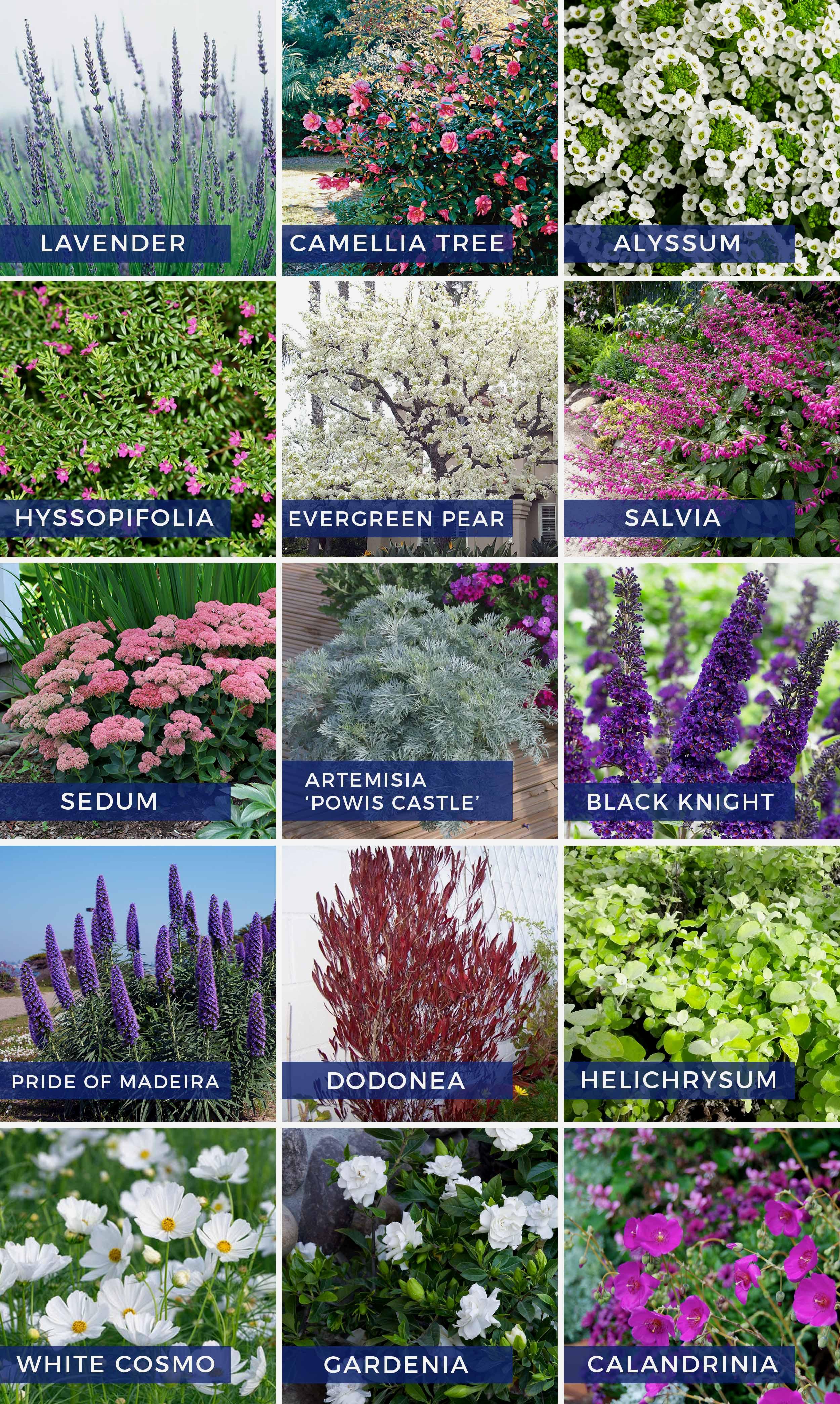 Stylist Design Backyard Flowers Perennial Flower Garden Ideas ...