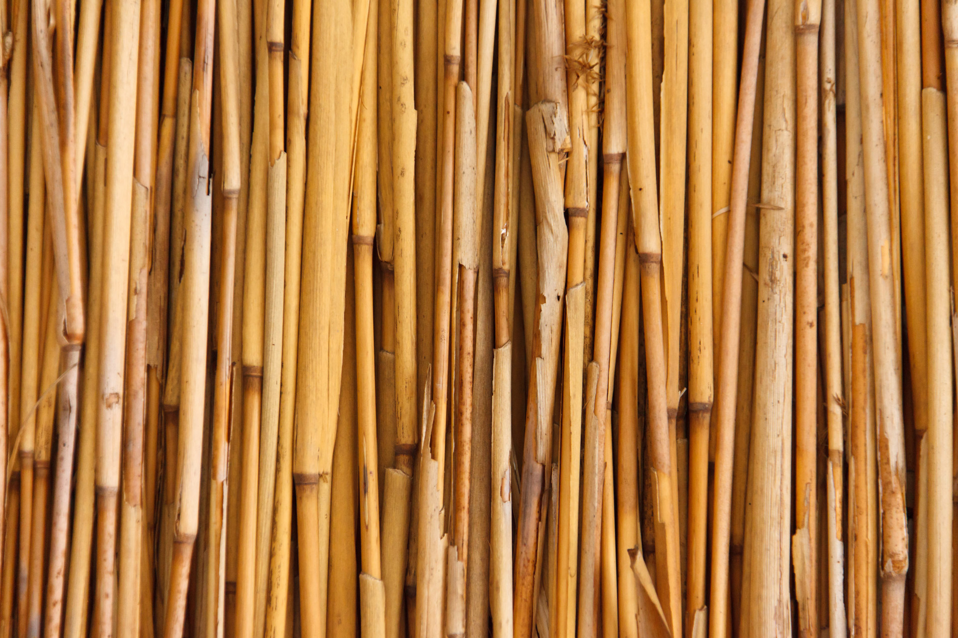 Bamboo Texture Free Stock Photo - Public Domain Pictures